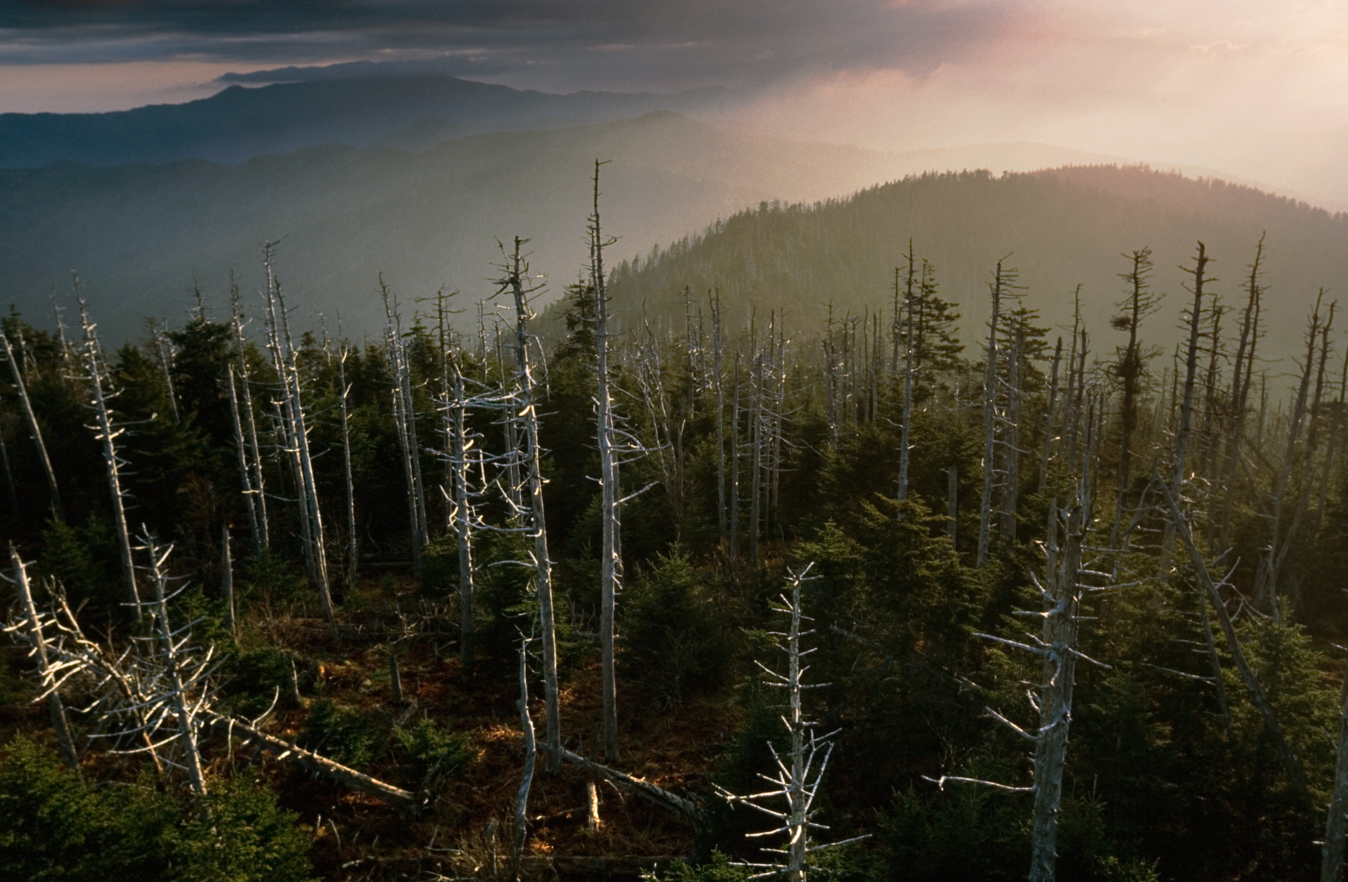 A toxic yellow haze hangs over dead trees, felled by aphid infestation brought on by the pollution.  Blue Ridge Parkway, North Carolina