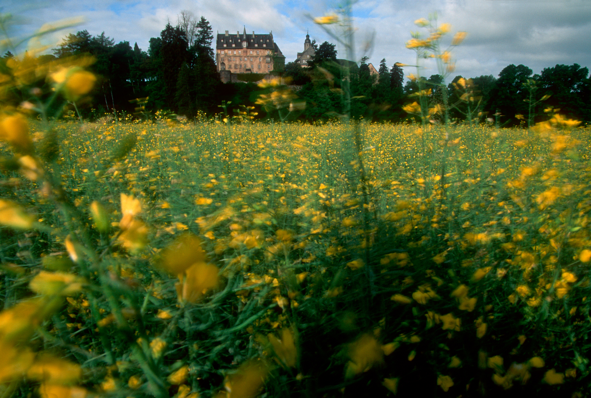 Blossoms fill the fields around Eisenbach Castle.  Eisenbach castle, Lauterbach, Germany