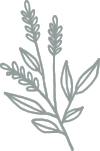 Sarah - Branches Lavender.png