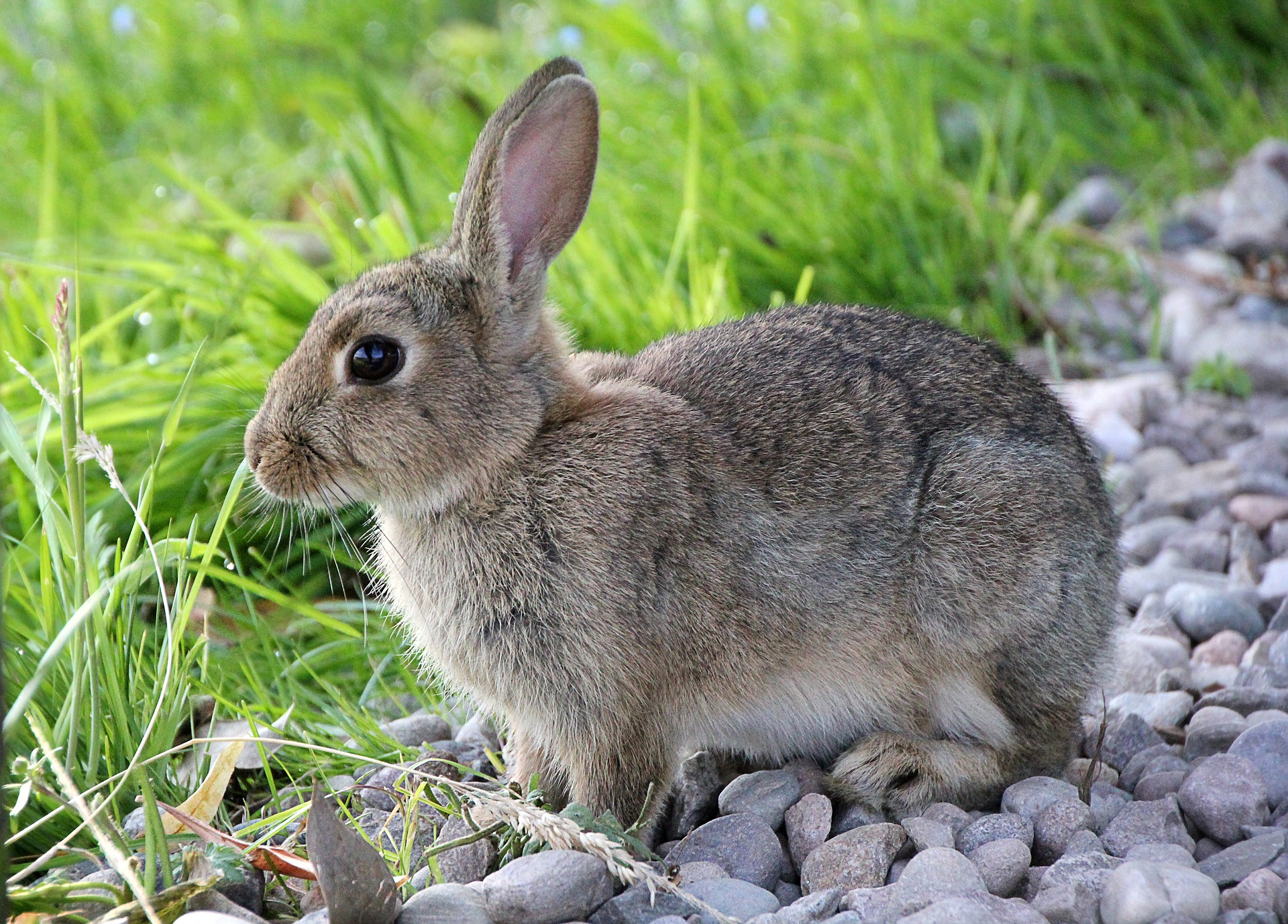 hare-2647220_1920.jpg