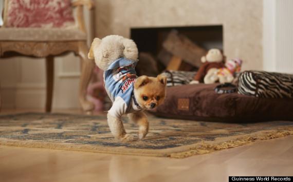 dog walking blog.jpg