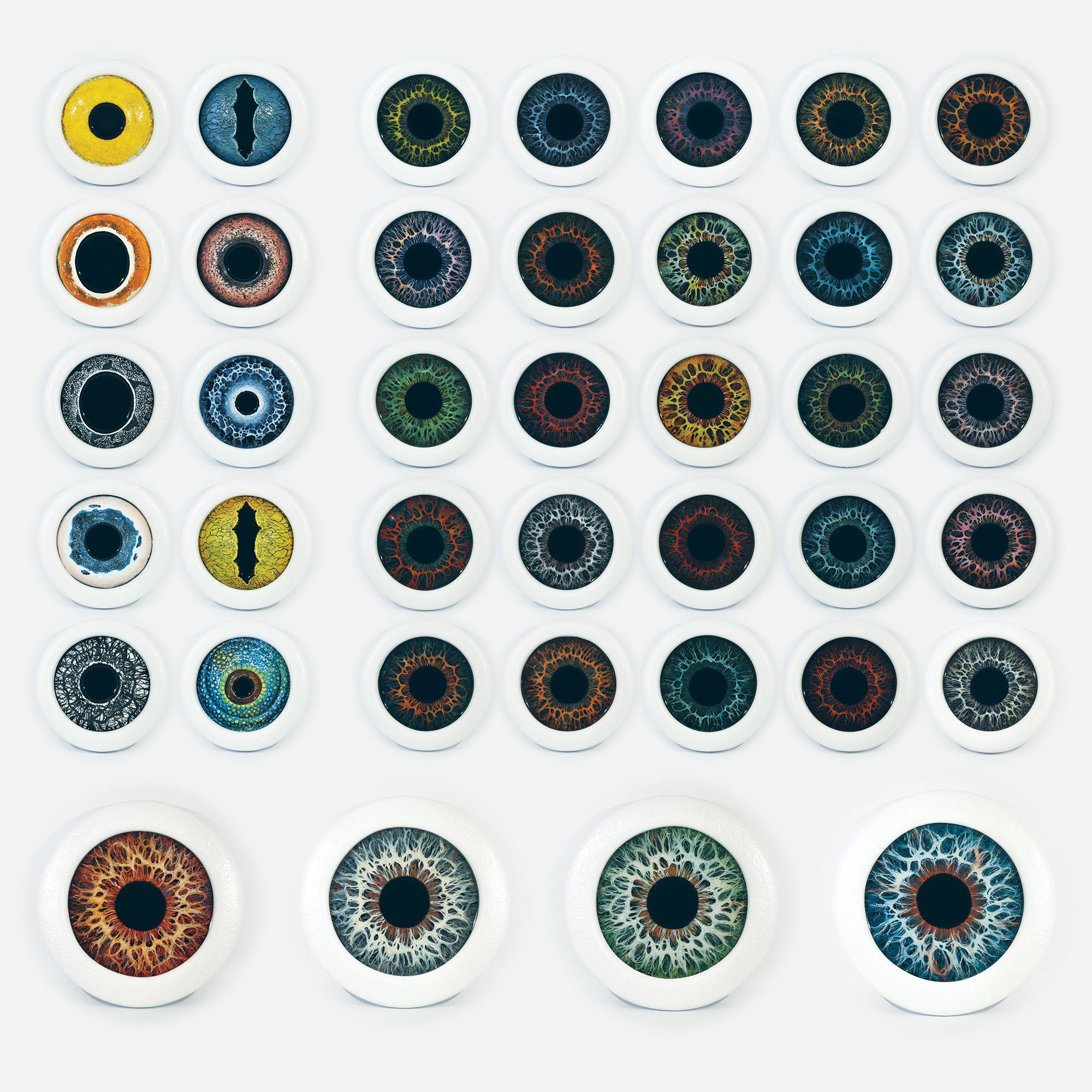 iris project.jpg