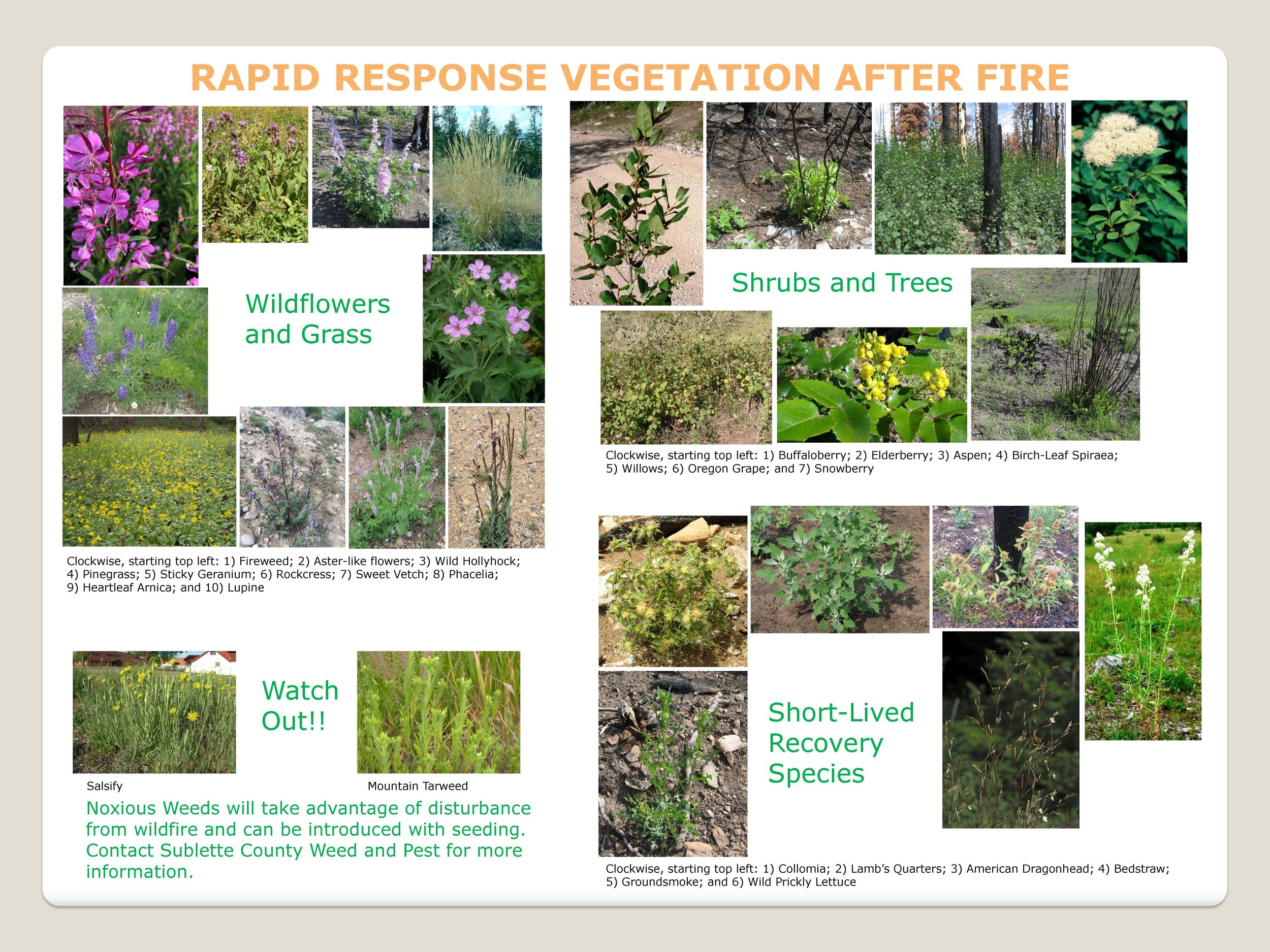Click on the picture to download Rapid Response Vegetation After Fire