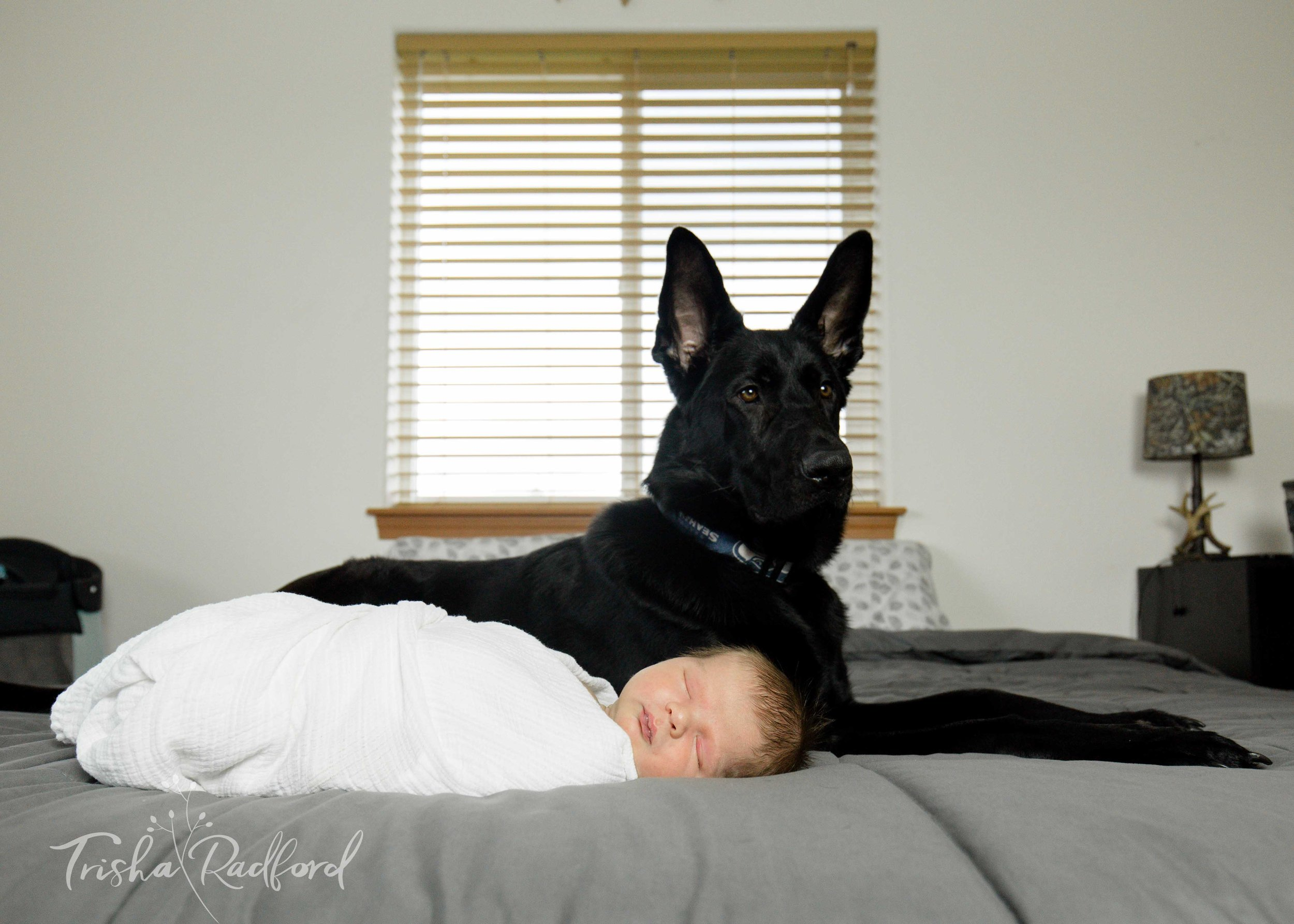 Newborn with black German Sheppard