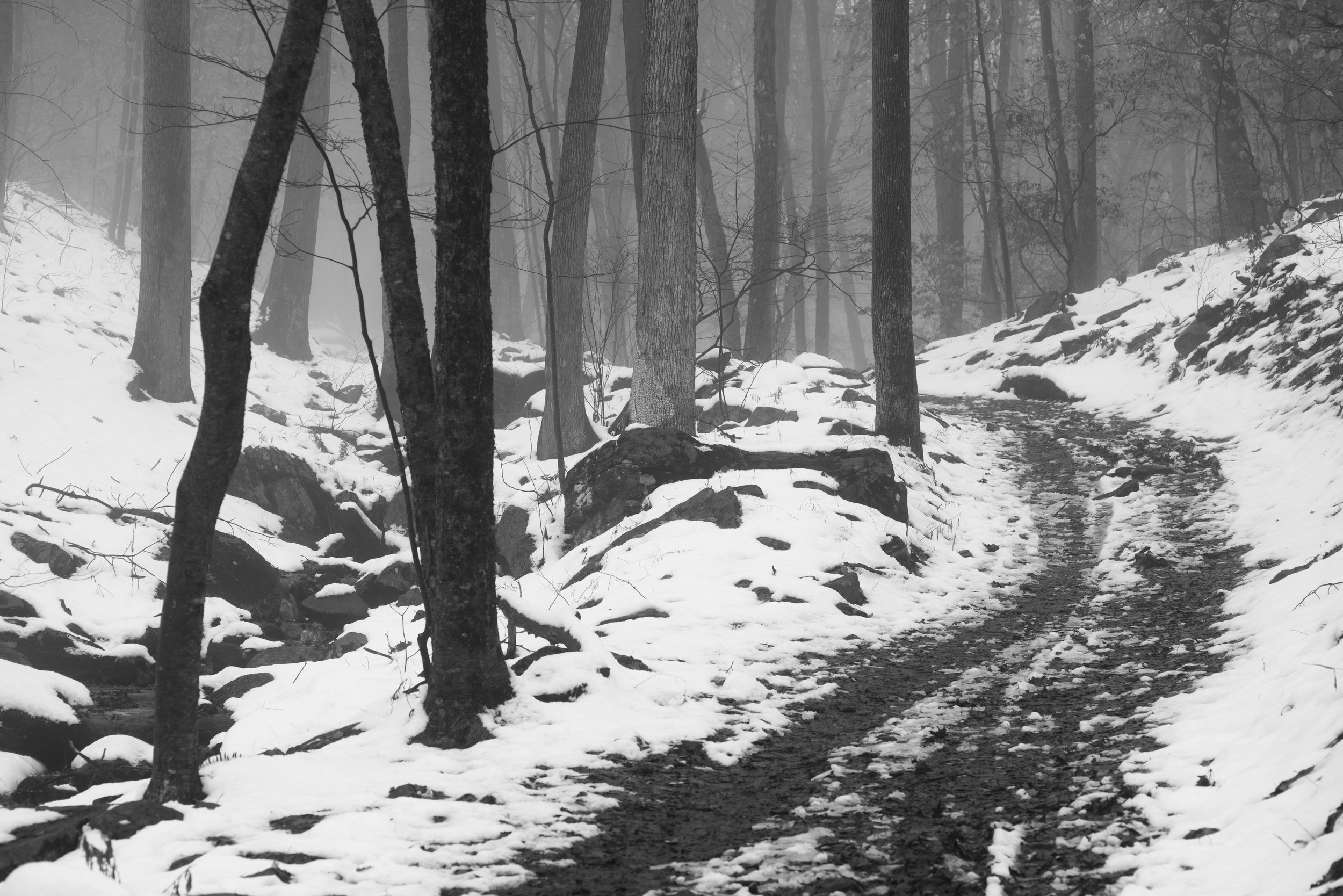 Path Through Snow and Fog