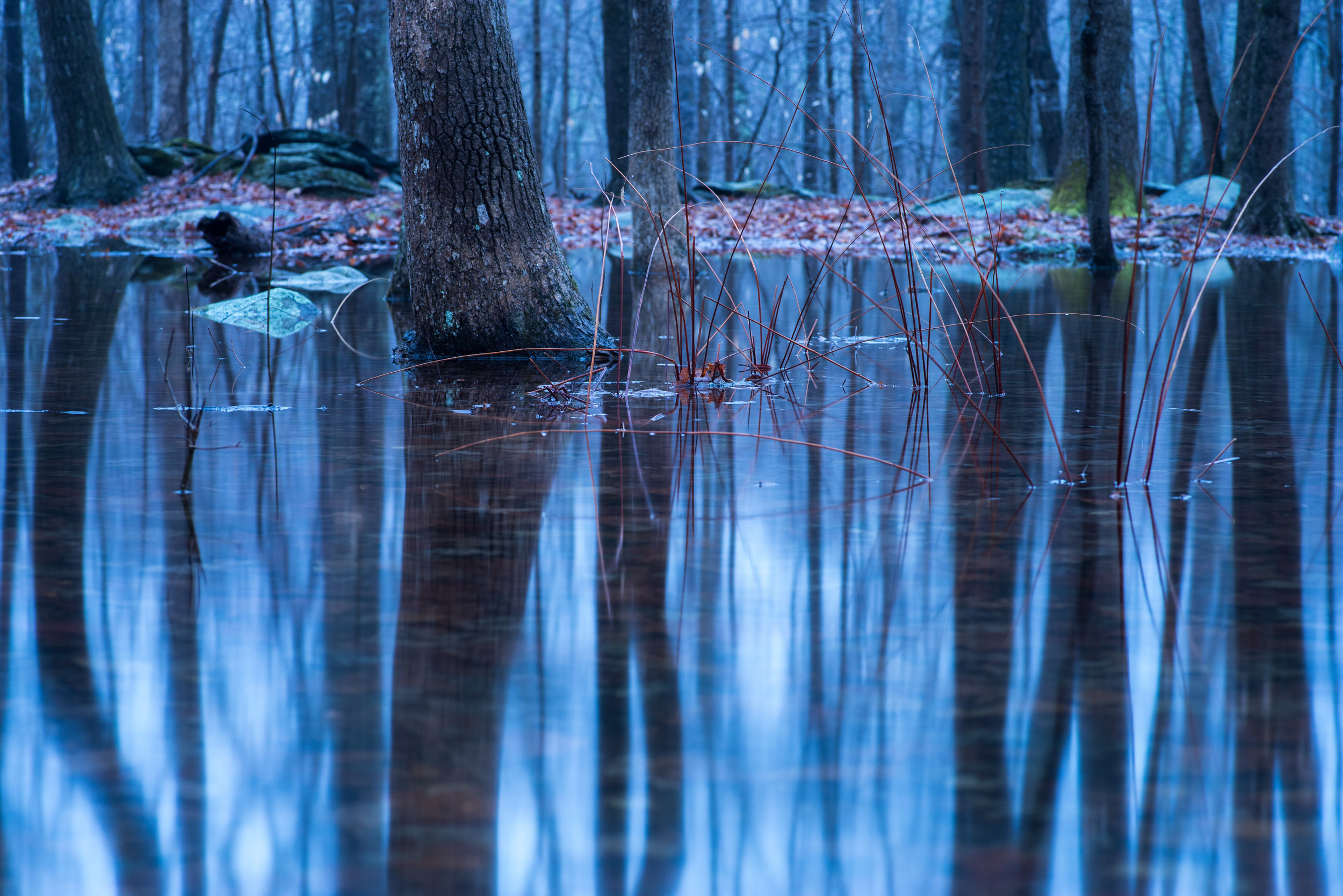 reflections_vernal_pool.jpg