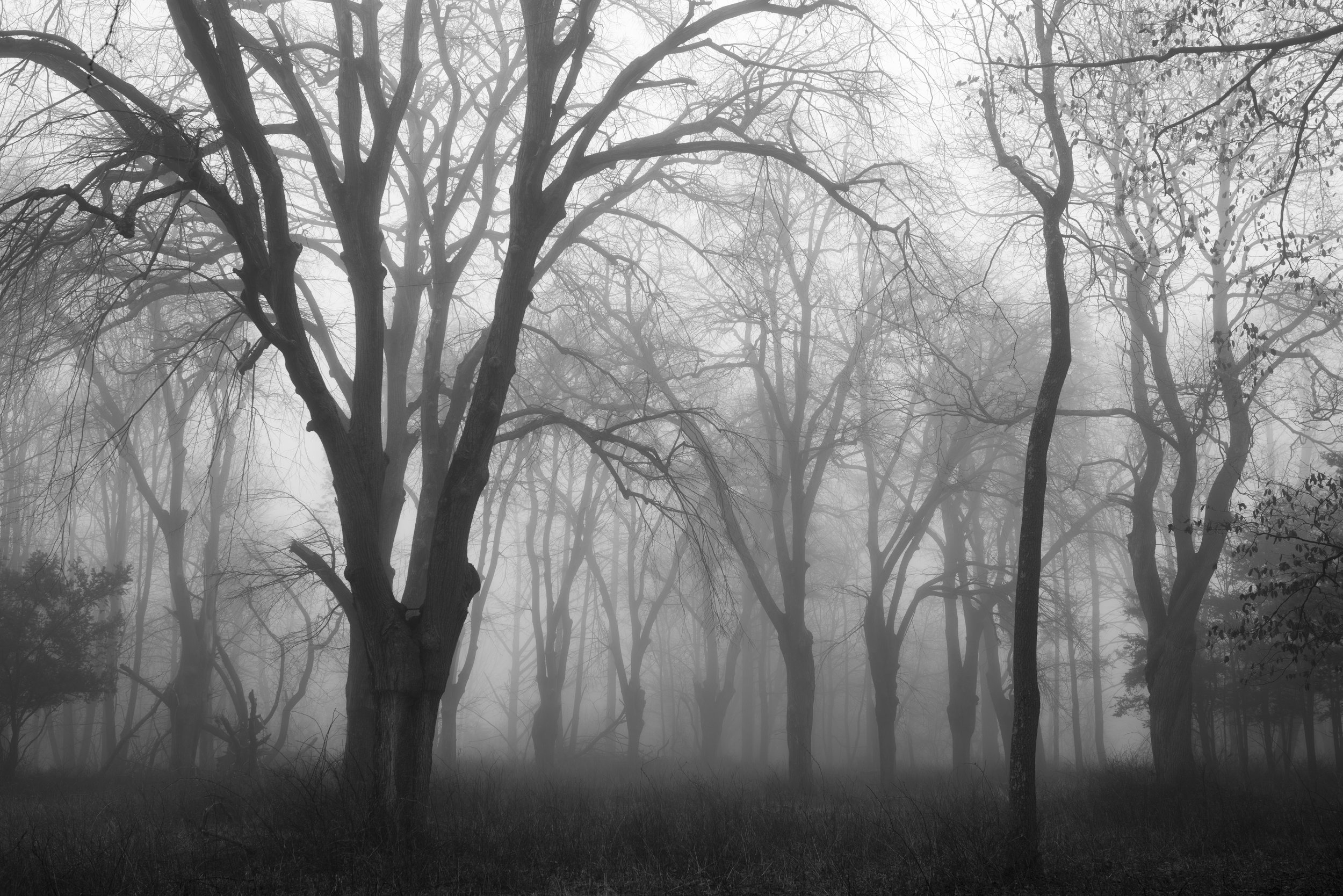 trees_in_fog_web.jpg