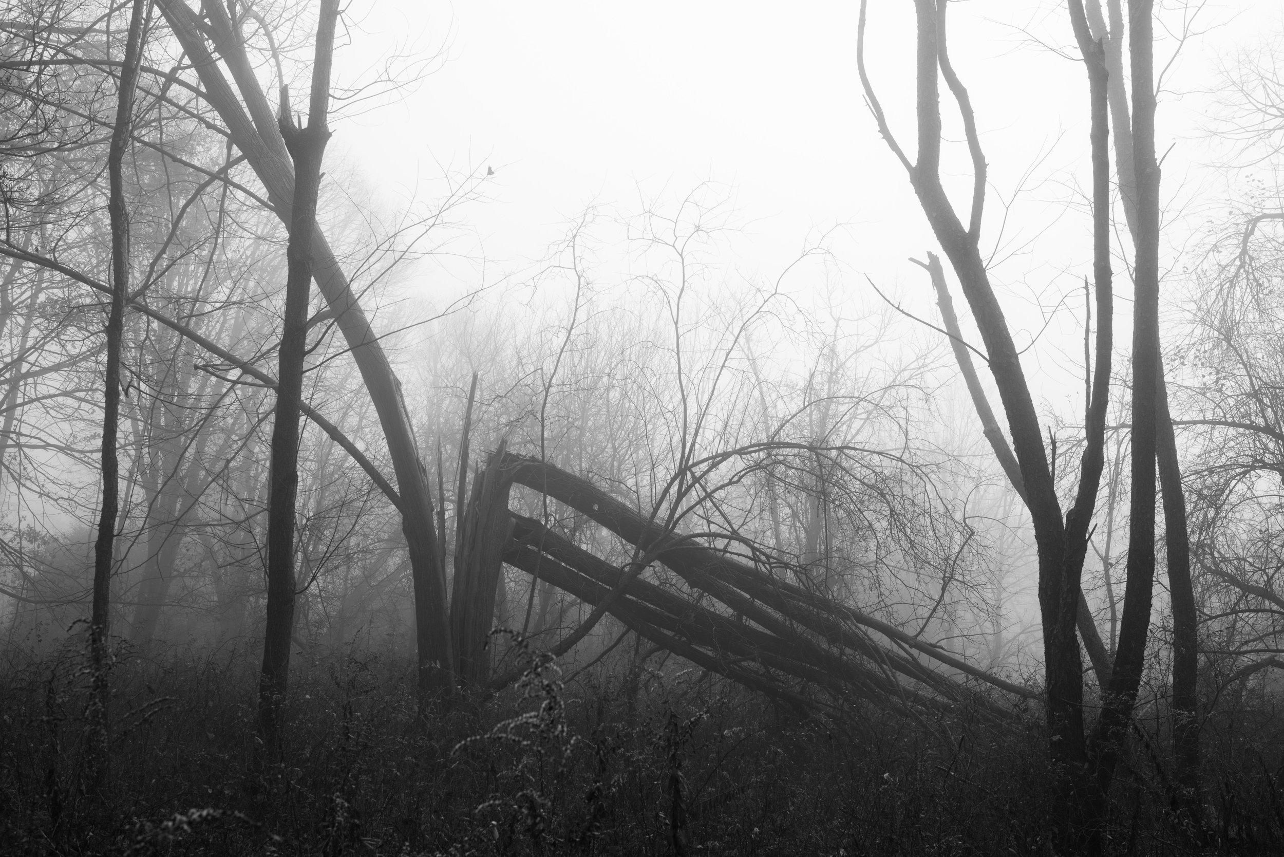 fallen_tree_fog.jpg