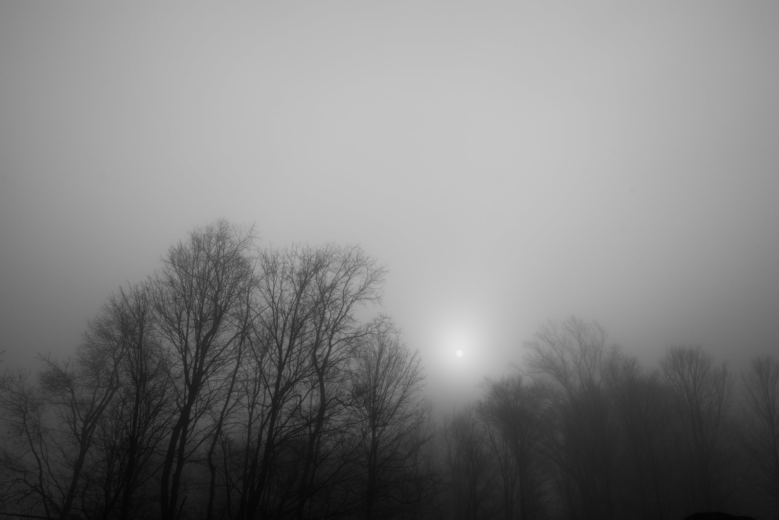 sun_peaking_foggy_trees.jpg