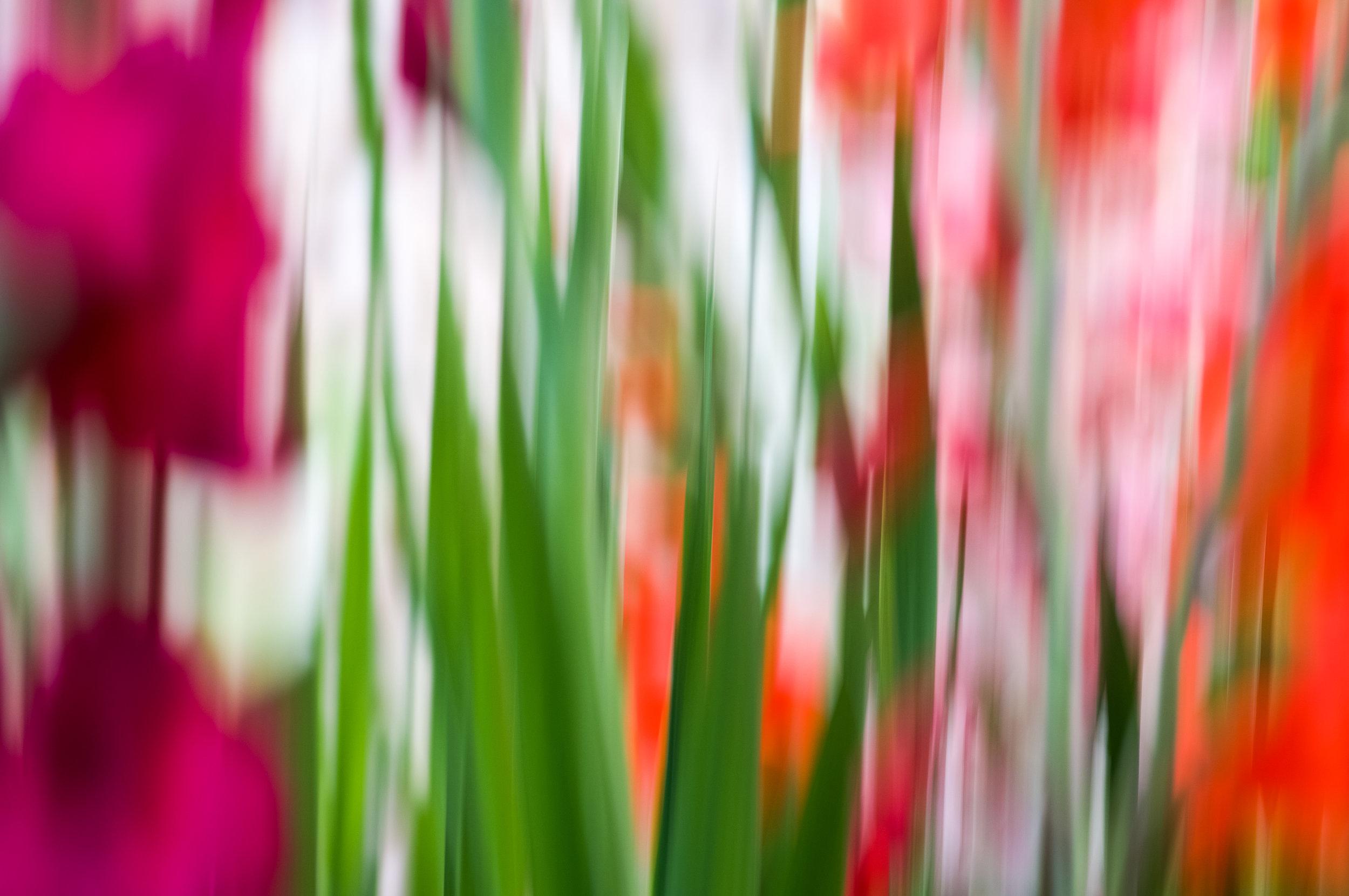 colors_weston_garden.jpg
