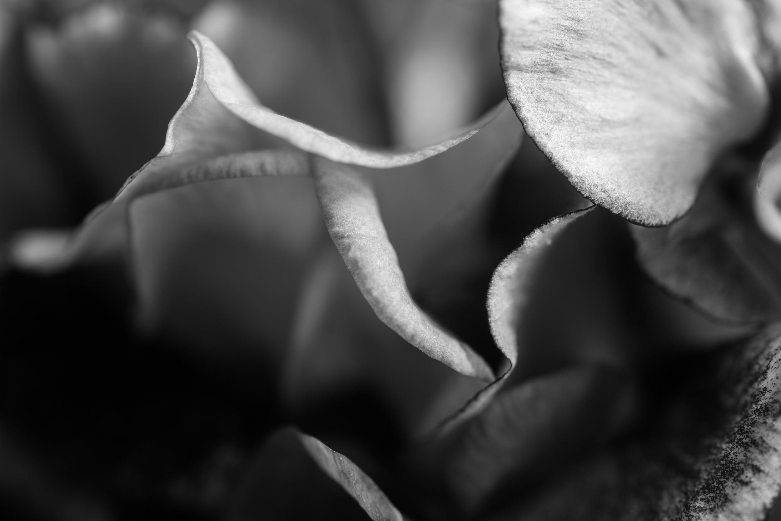 petal_macro.jpg