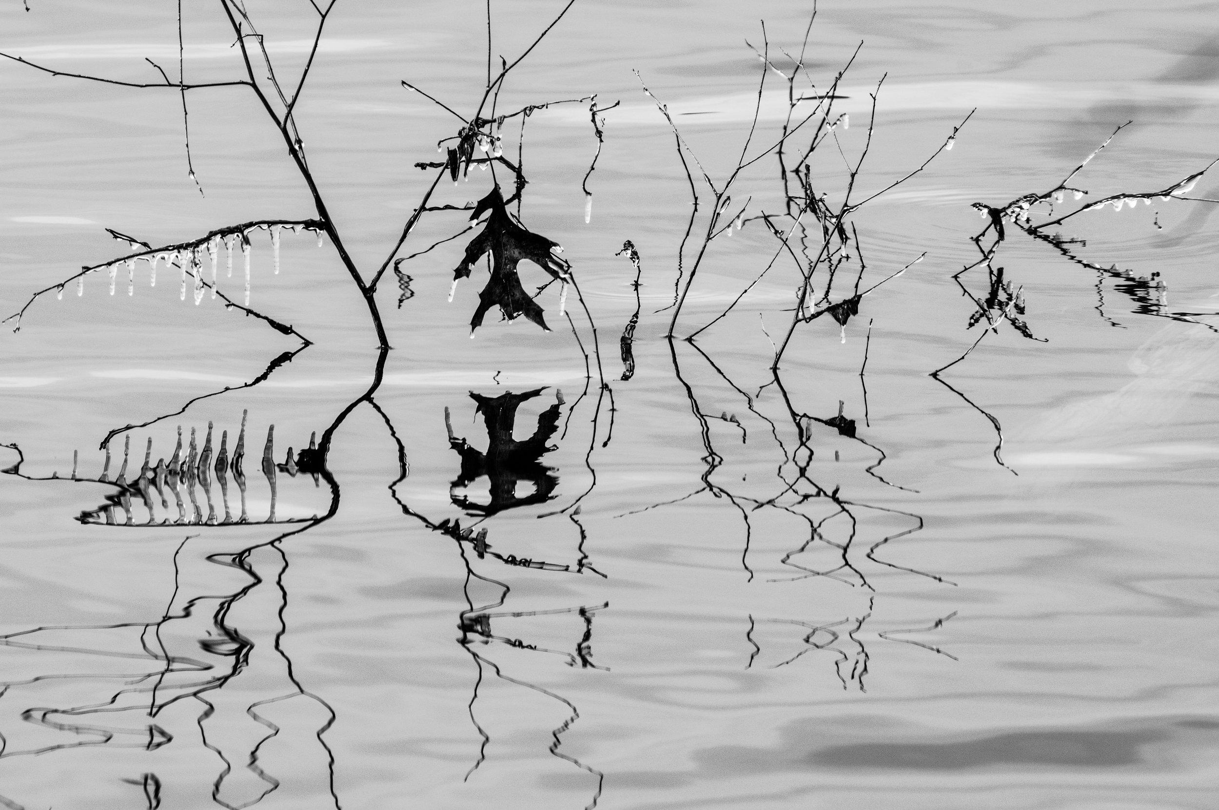 leaf_twig_reflection_abstract.jpg