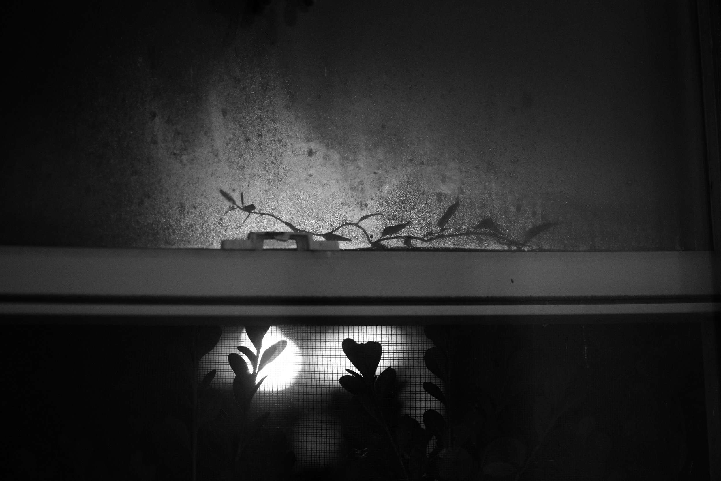plants_windowsil.jpg