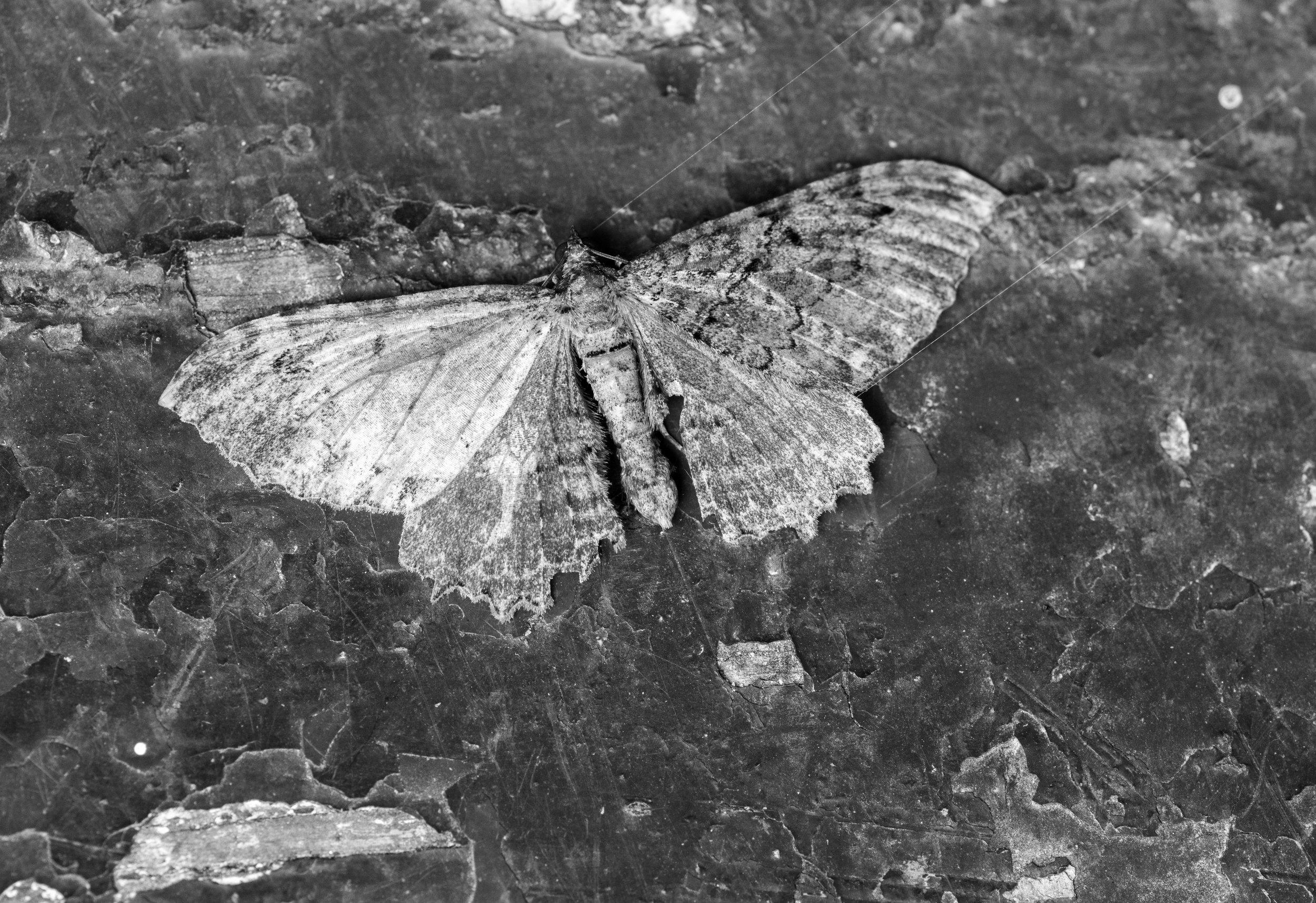 moth_on_chipped_paint.jpg