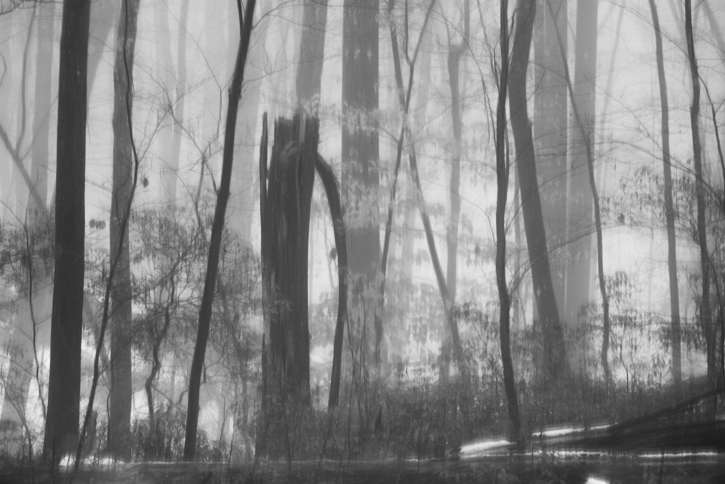 diversity_trees_fog.jpg