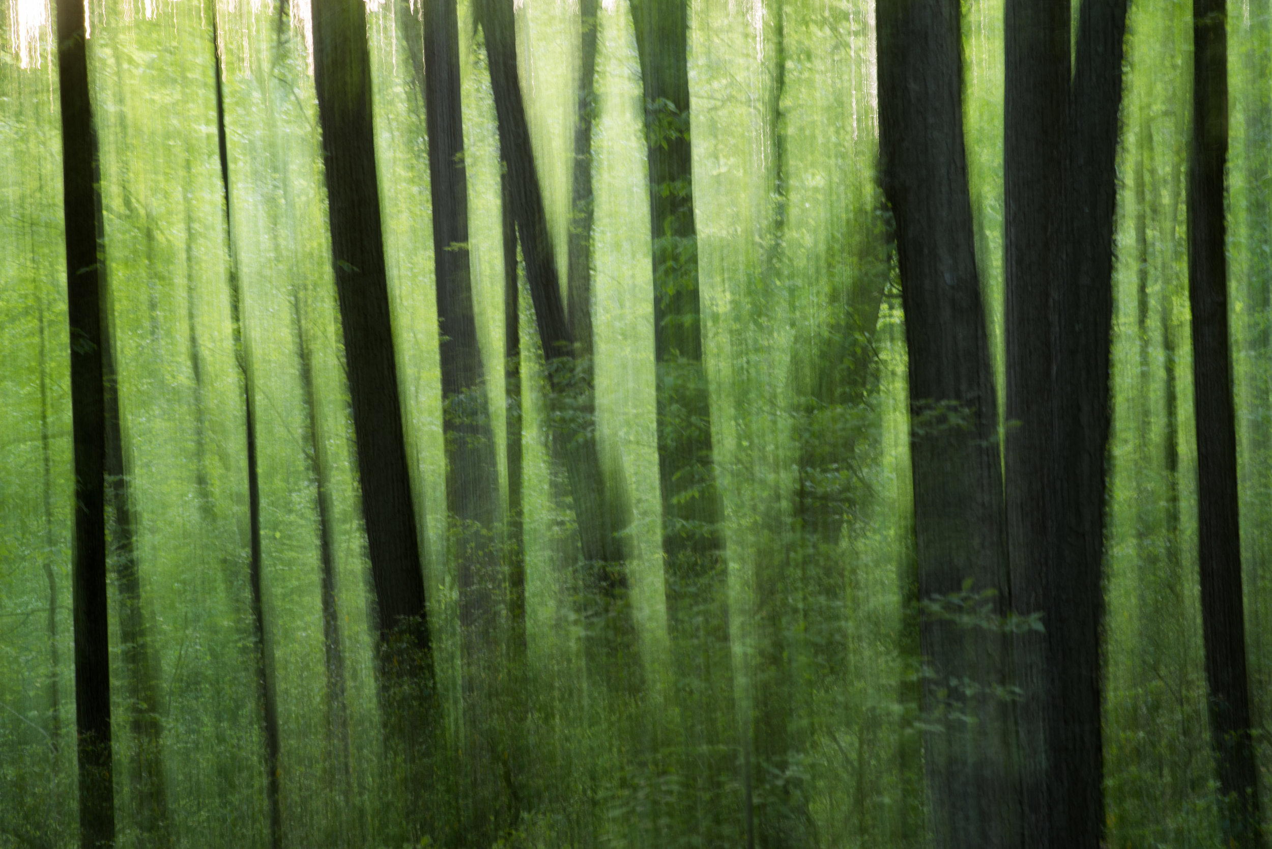 green_dream_forest.jpg