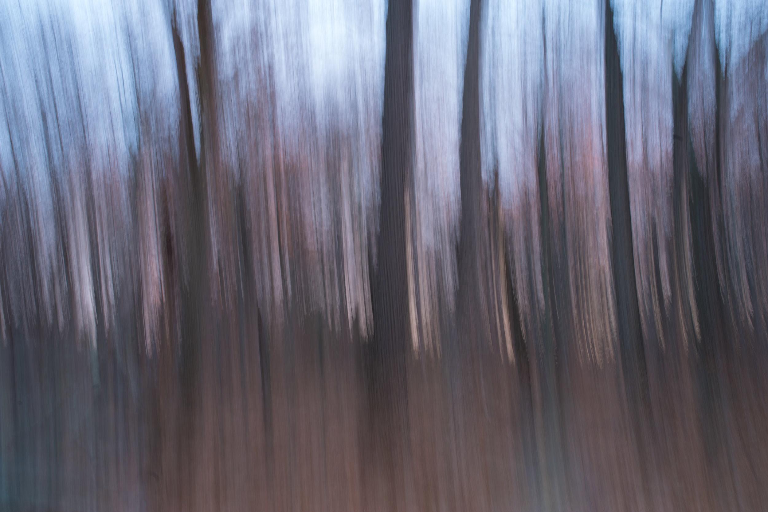 monroe_forest_evening.jpg
