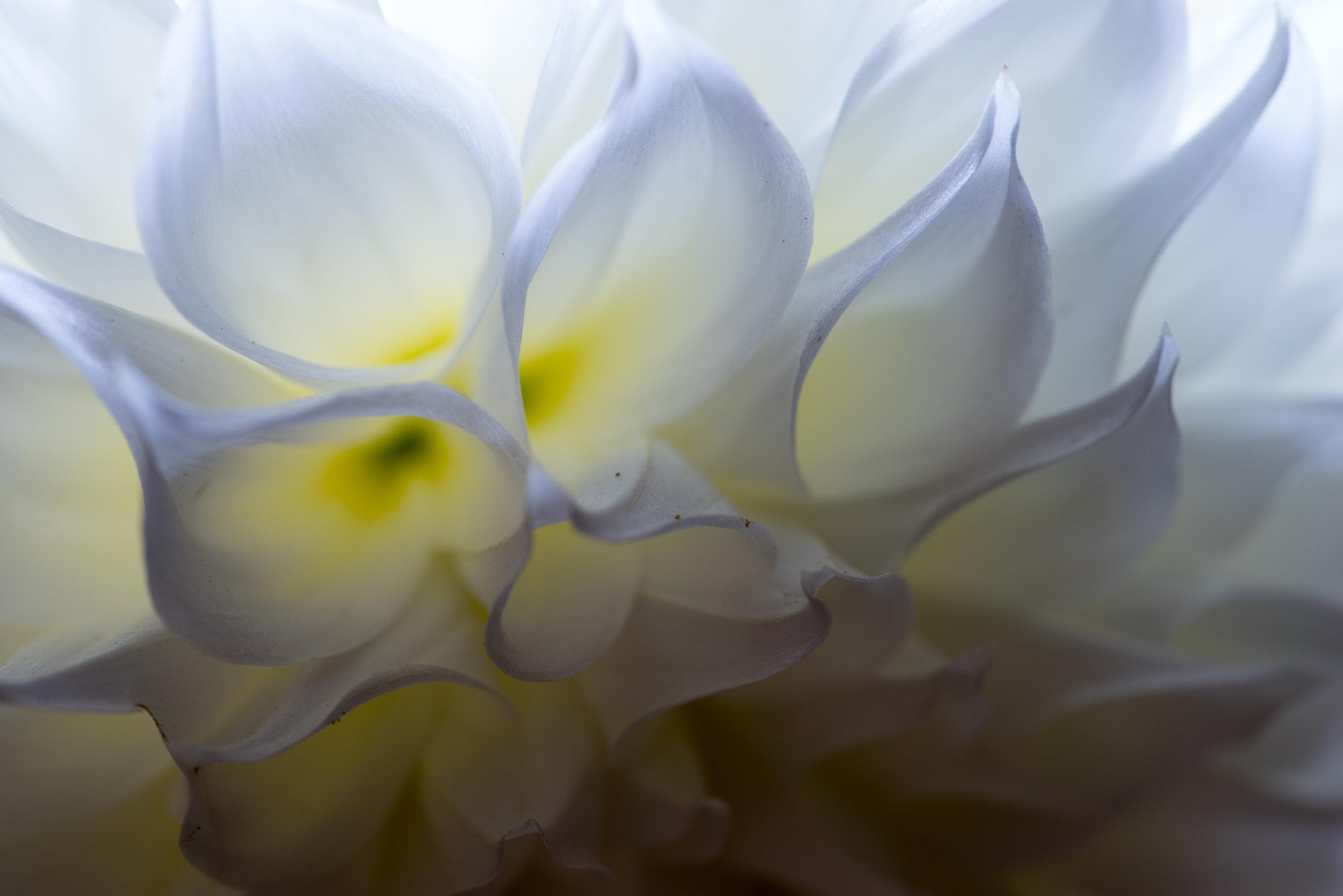 blossom_closeup-2.jpg