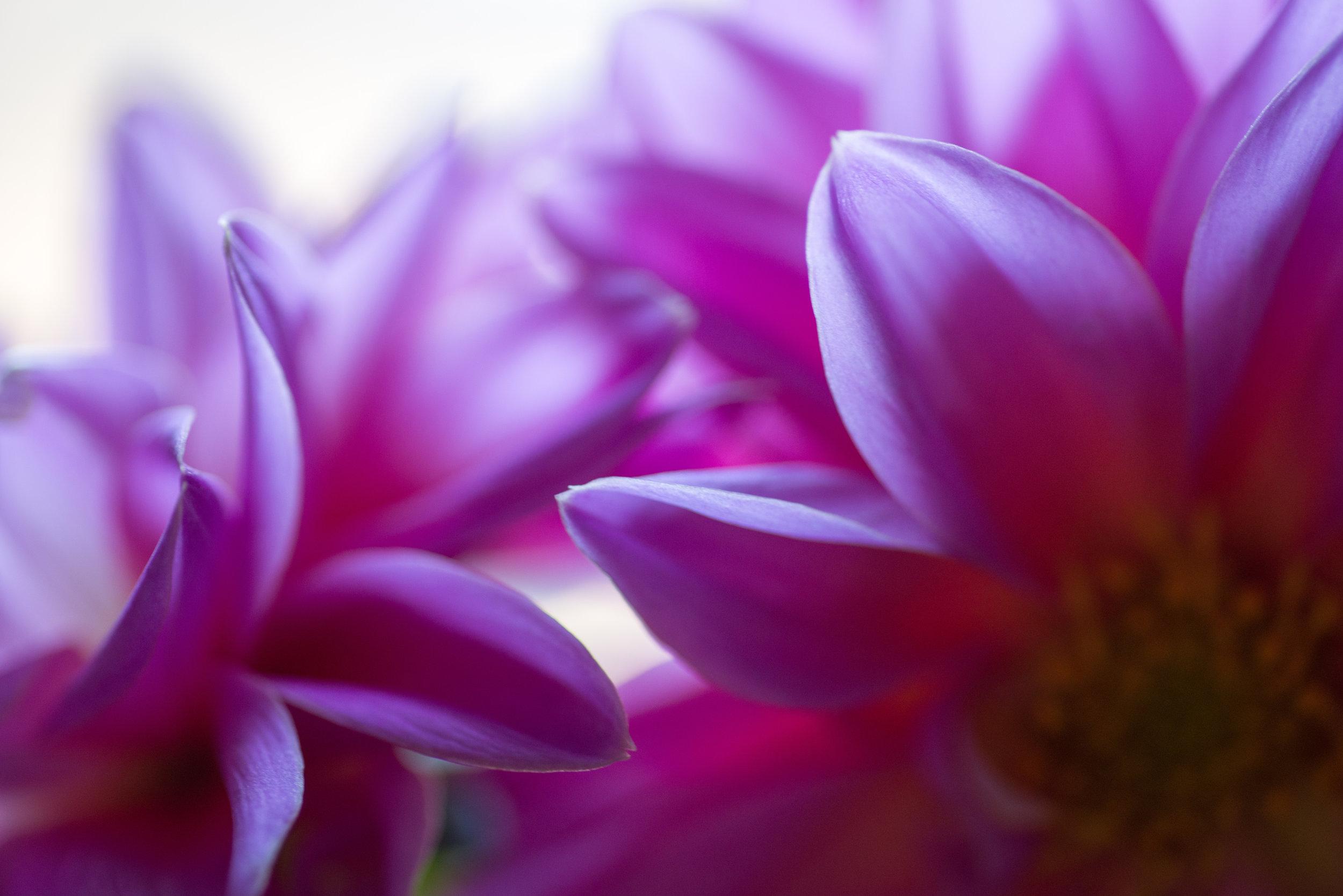 blossom_closeup.jpg