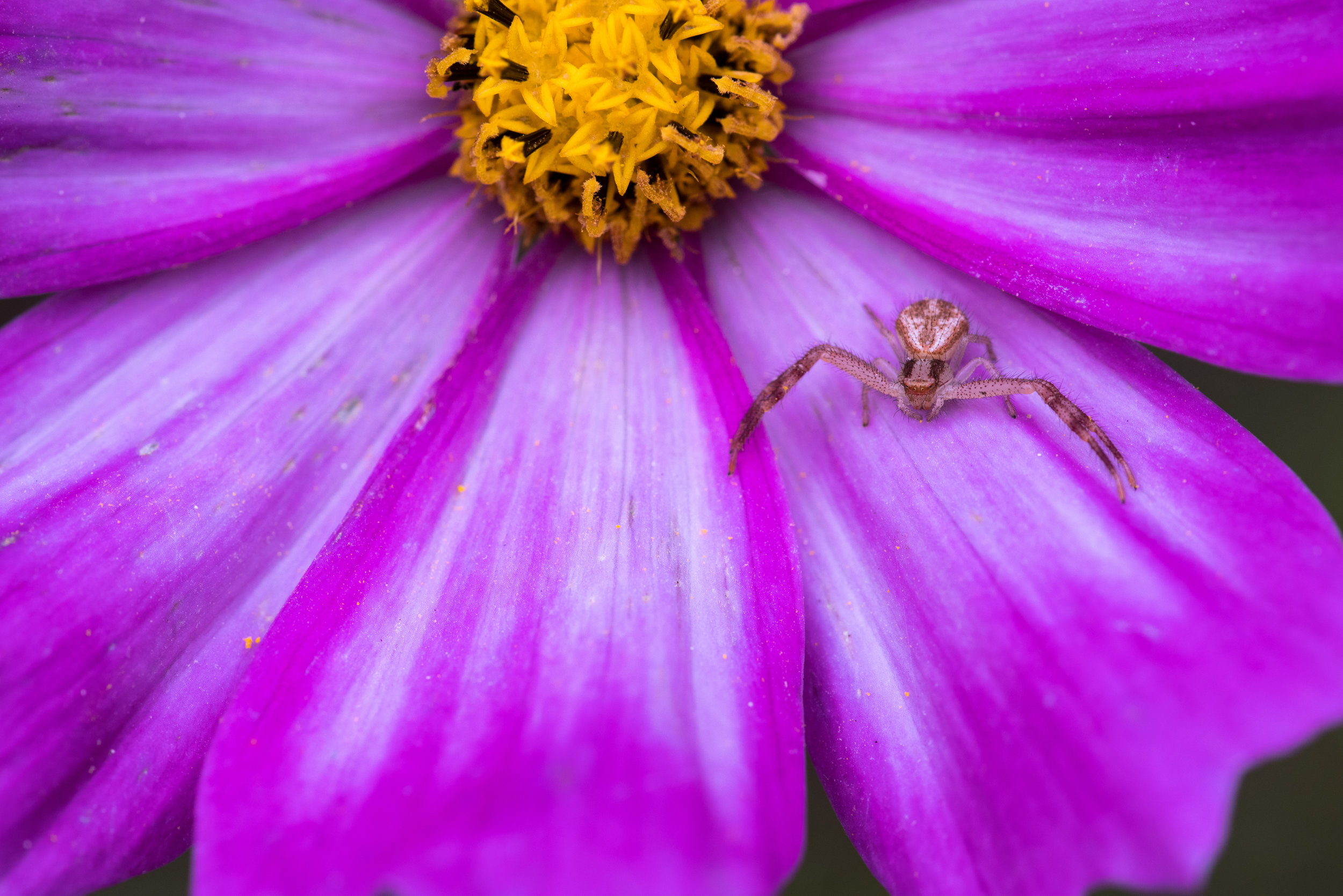 spider_on_flower.jpg