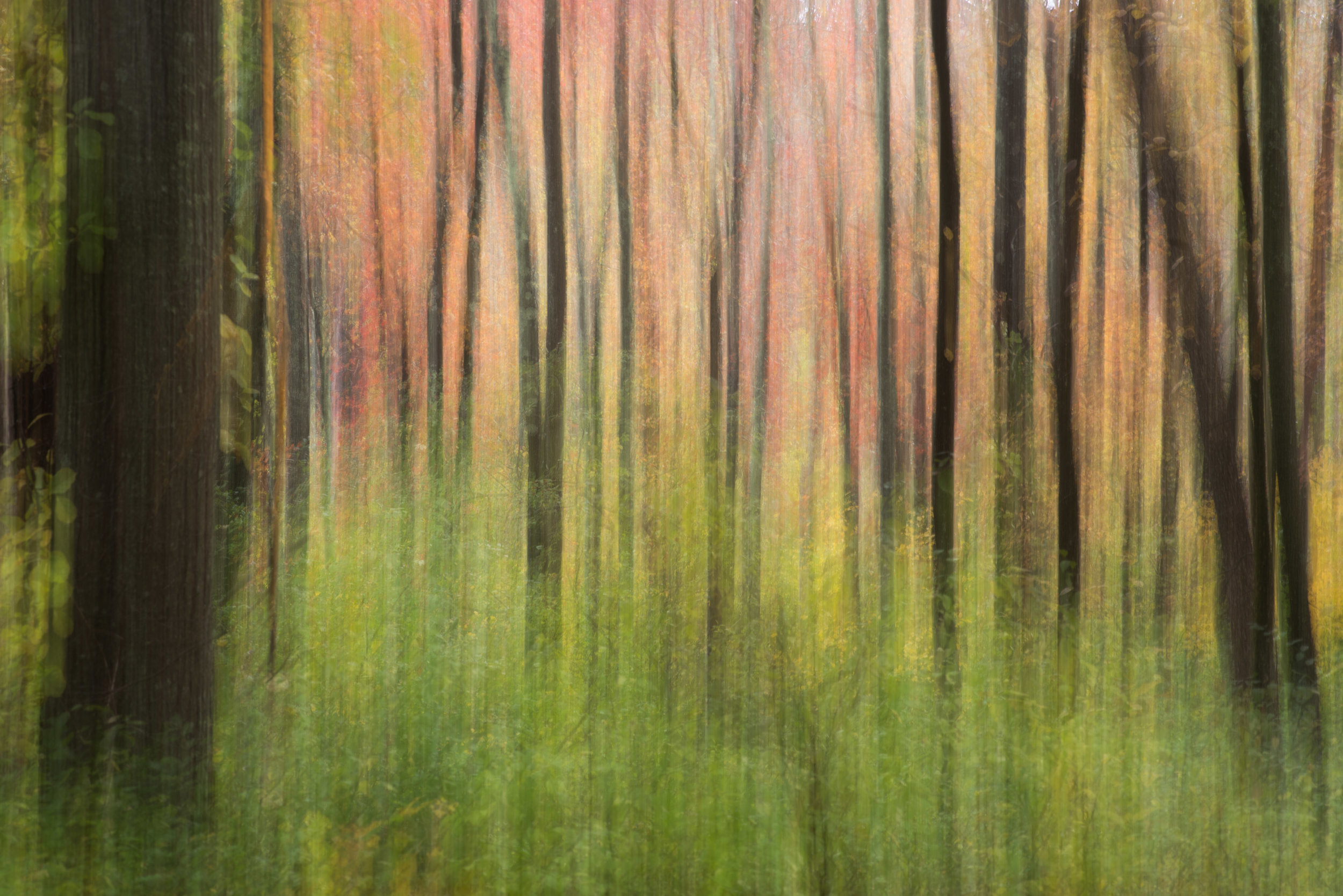 green and red dreamy forest.jpg