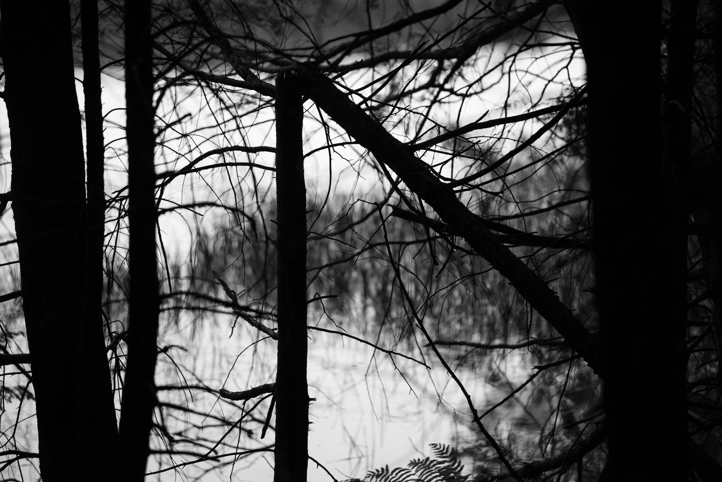 broken tree triangle.jpg