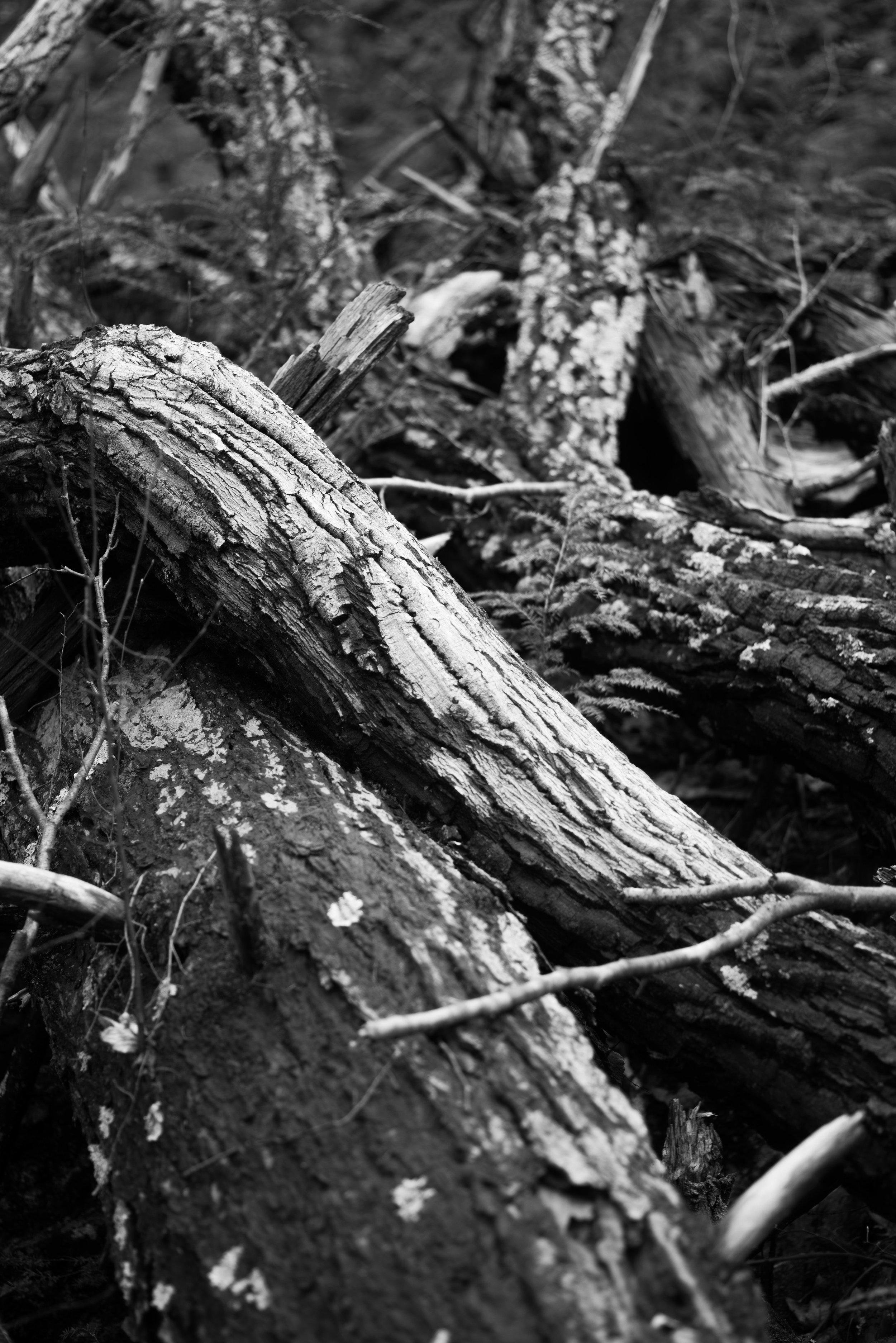 logs, weston.jpg