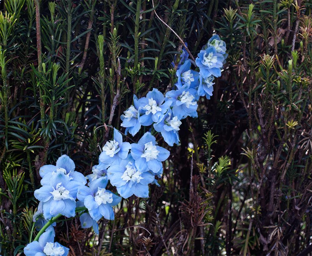 blue-flower-trail-leaf-background.png