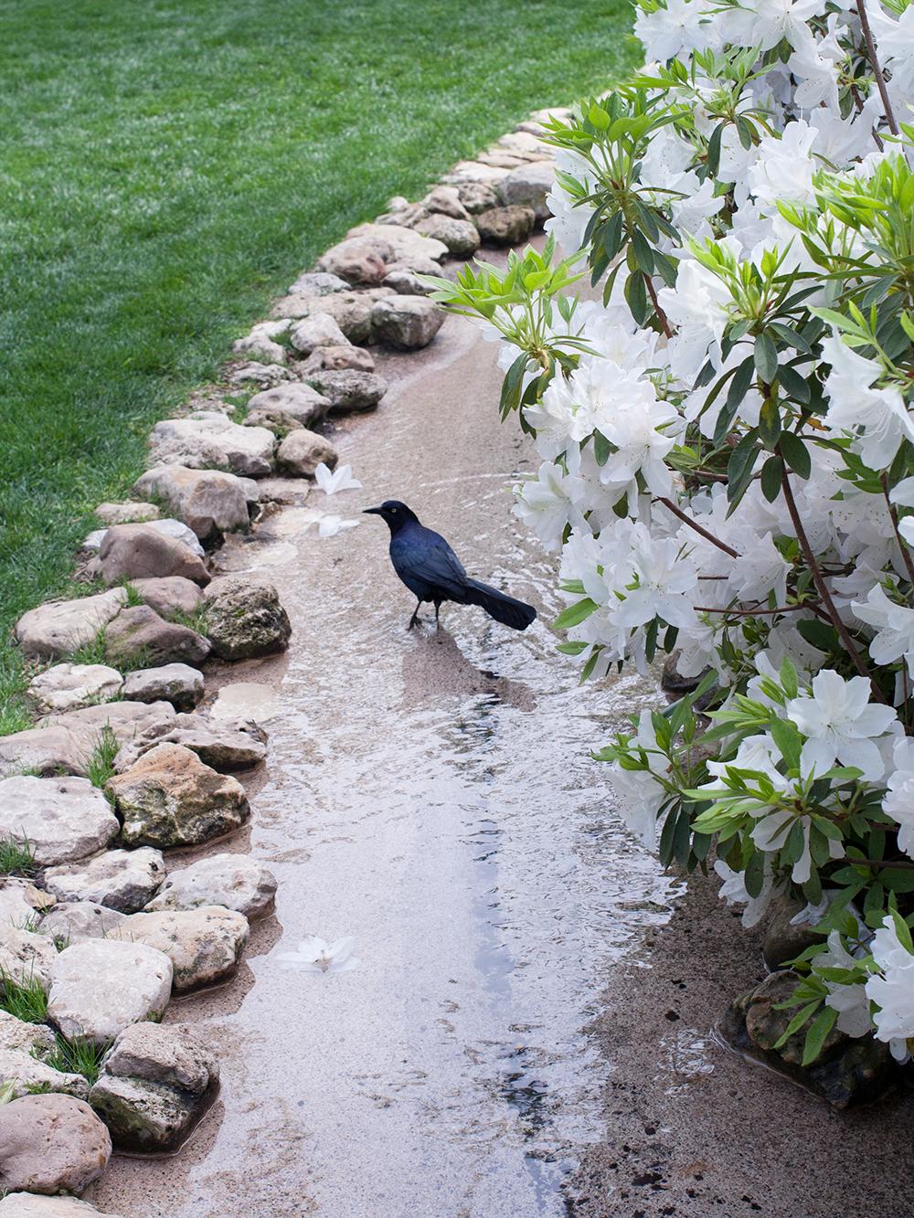 bird-in-water.png