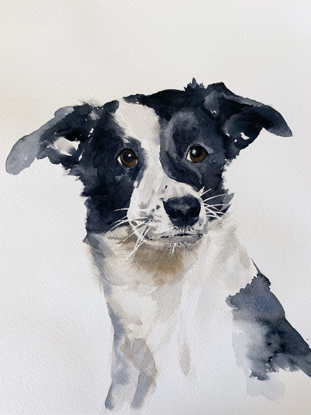 Susan Chiang: Watercolor practice: learning to paint Maisa the dog (attempt #2)