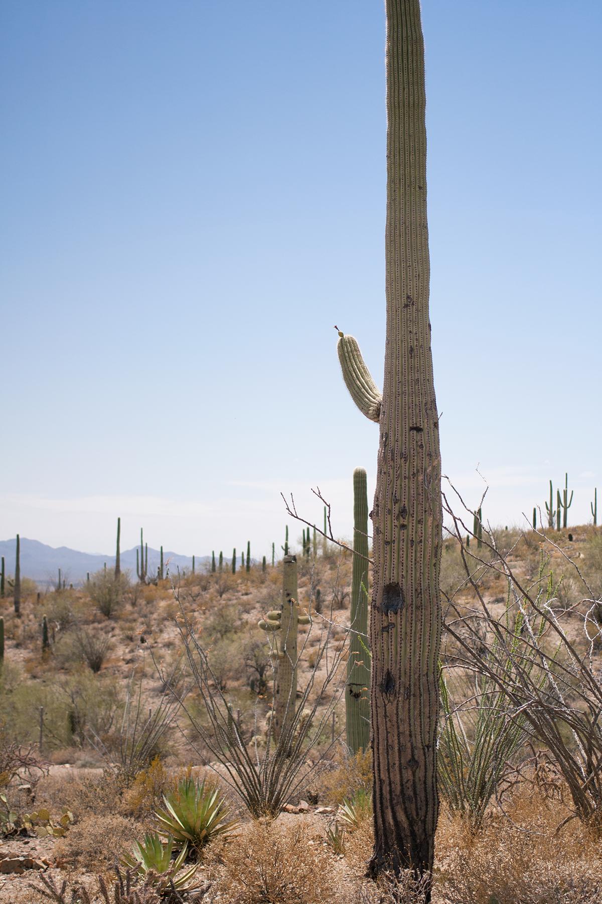 Tucson-desert-museum2.png