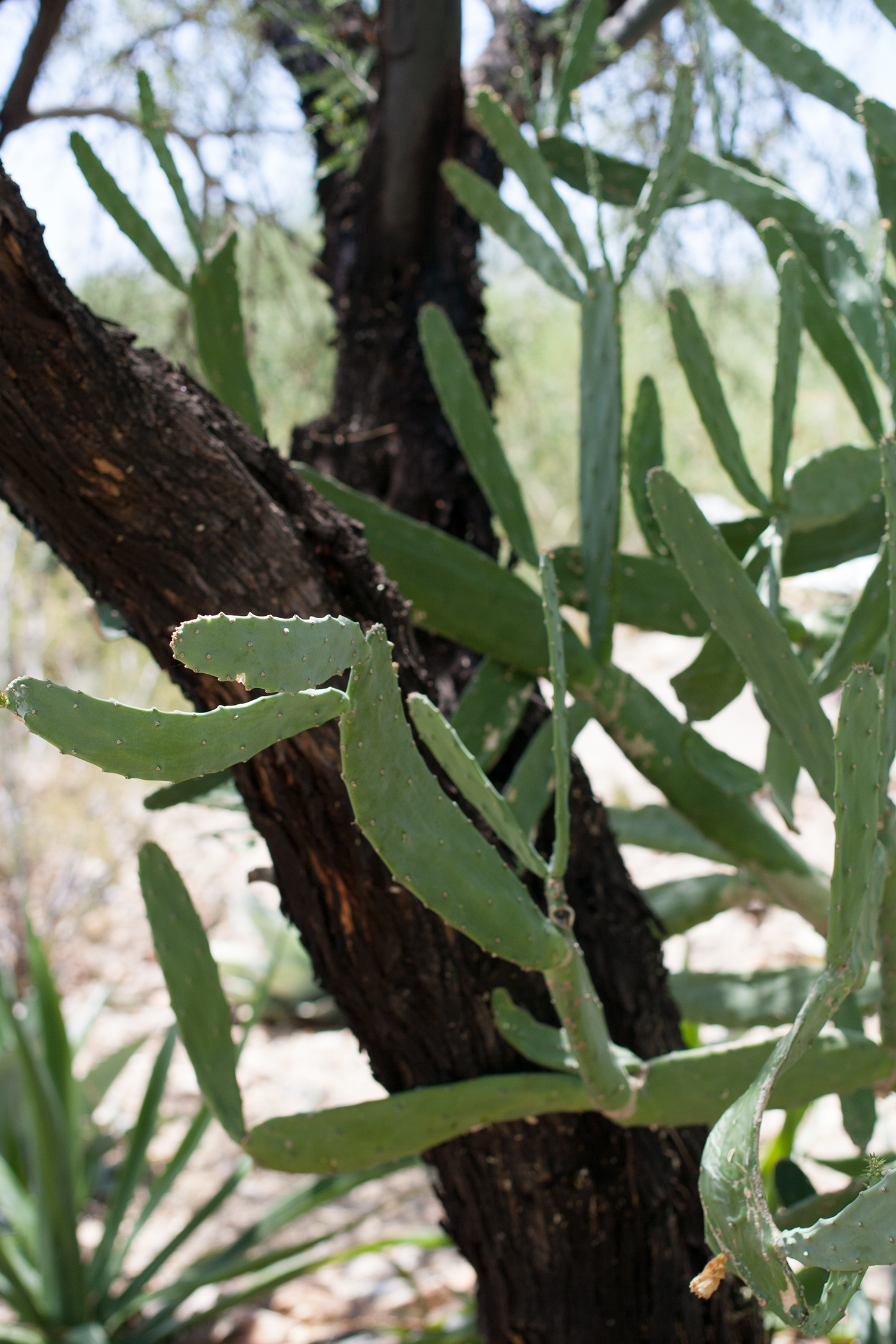 Tucson-desert-museum7.png
