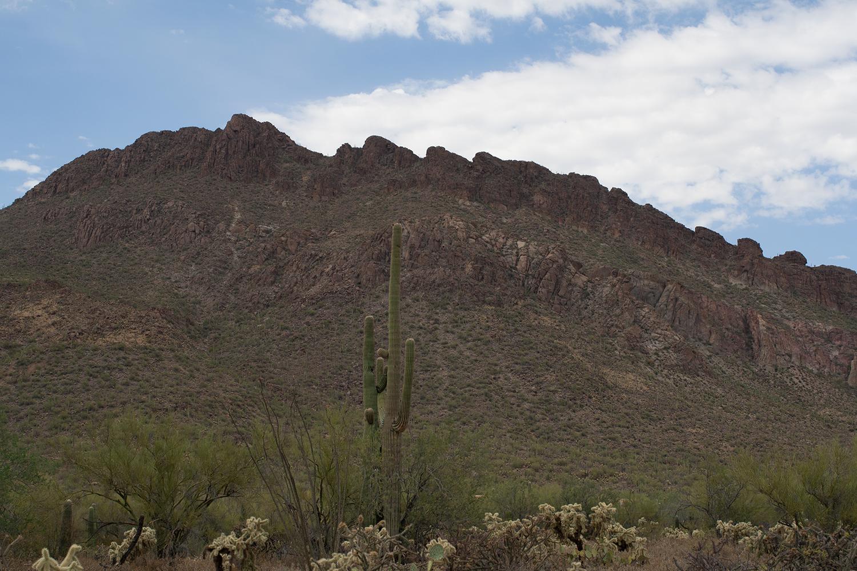 Tucson-desert-museum5.png