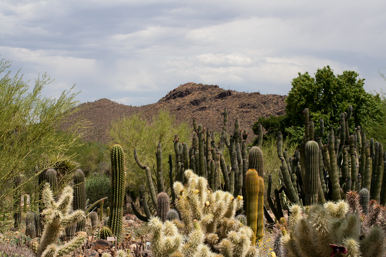 Tucson-desert-museum6.png