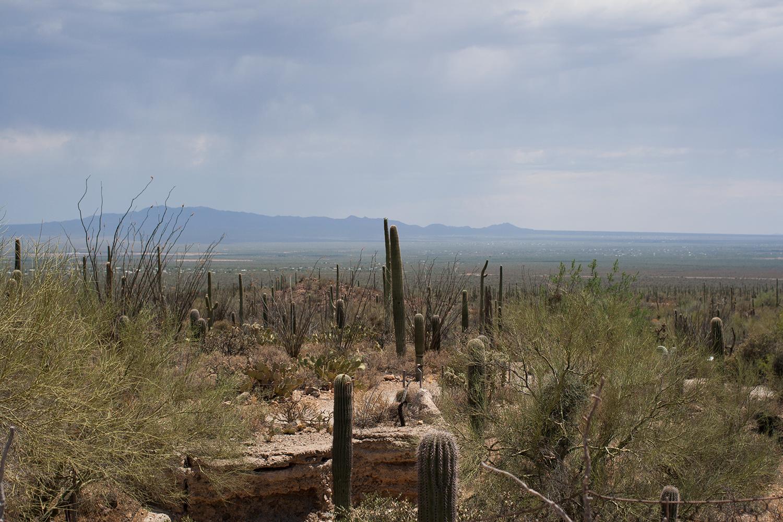 Tucson-desert-museum11.png