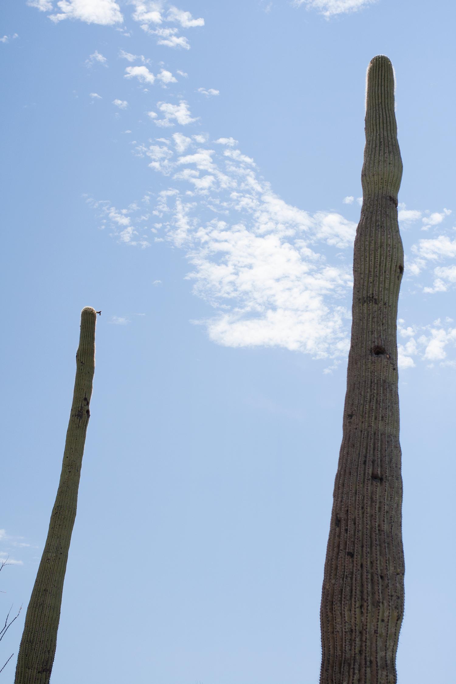 Tucson-desert-museum13.png