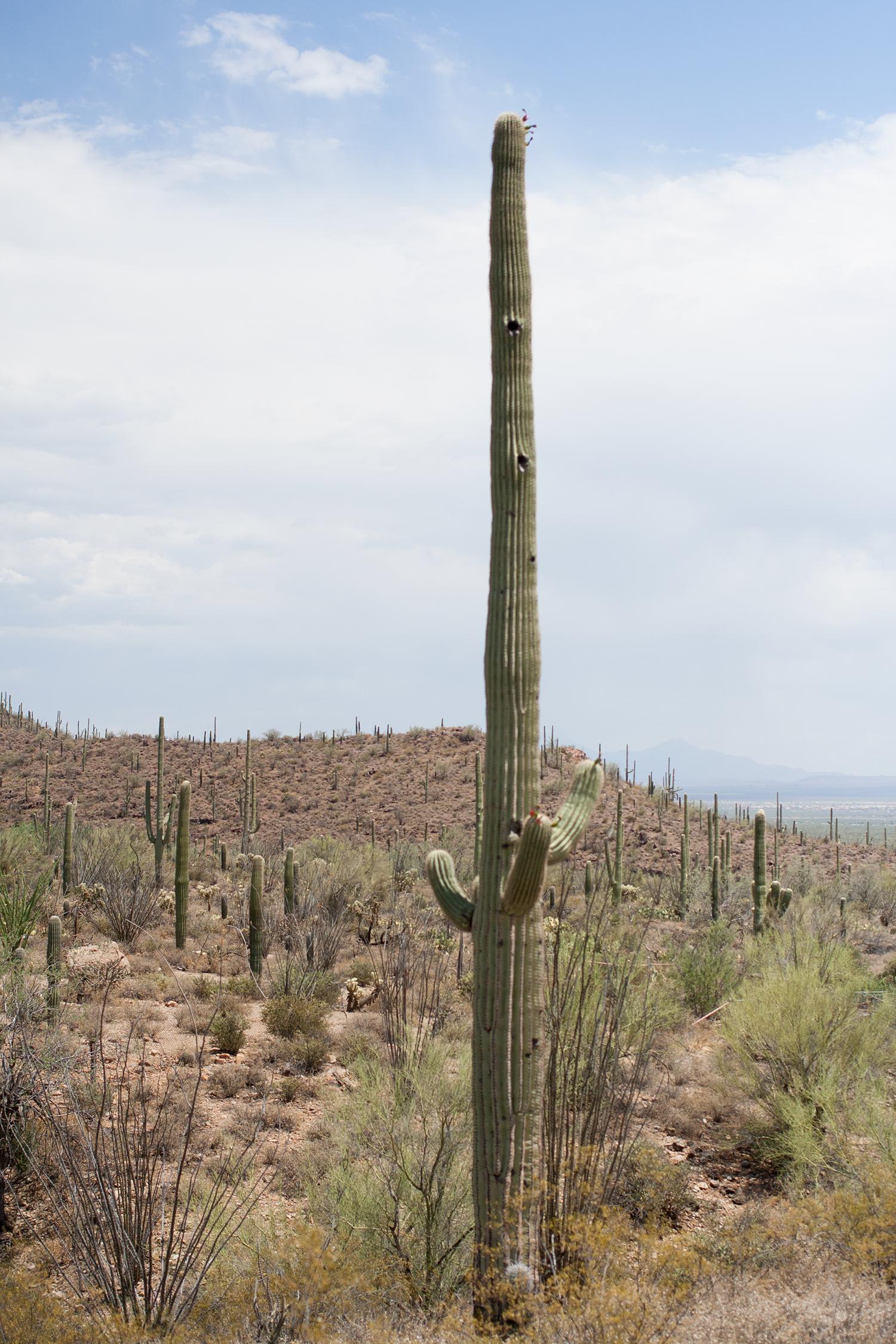 Tucson-desert-museum14.png
