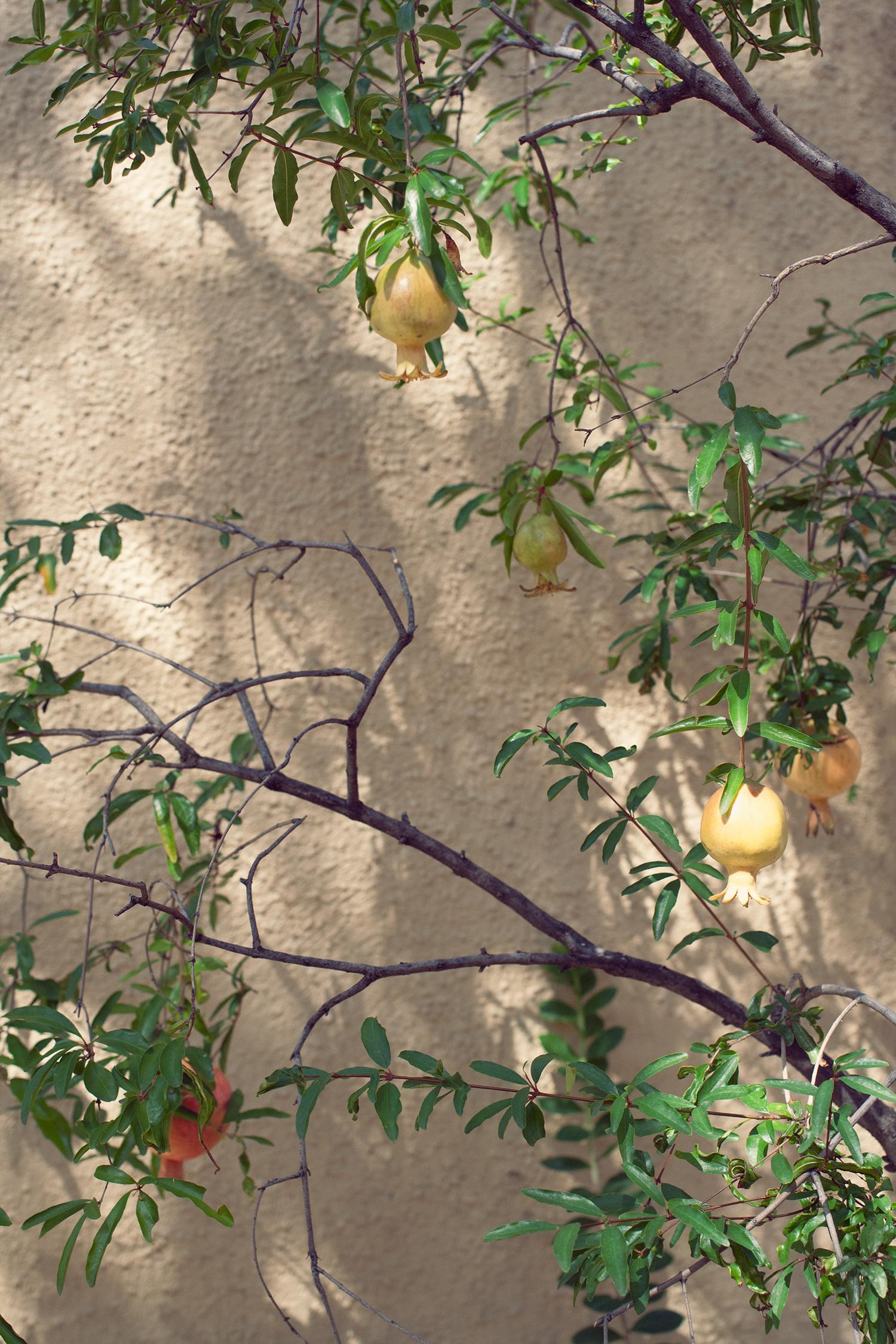tucson-botanic-garden2.png