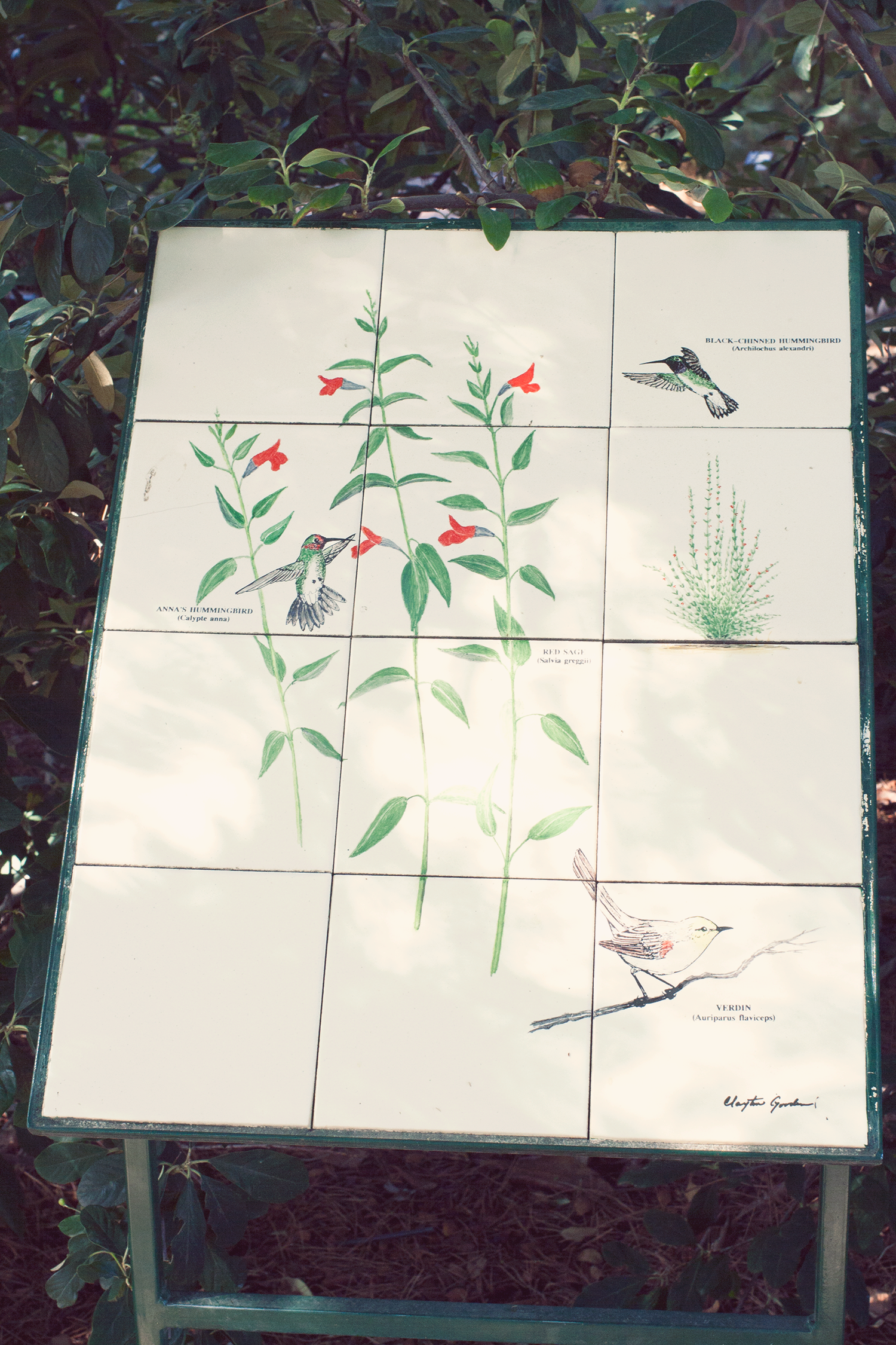 tucson-botanic-garden5.png