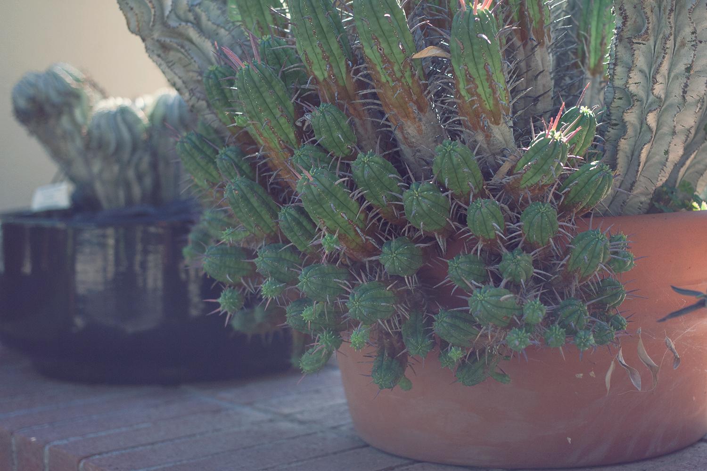 tucson-botanic-garden7.png