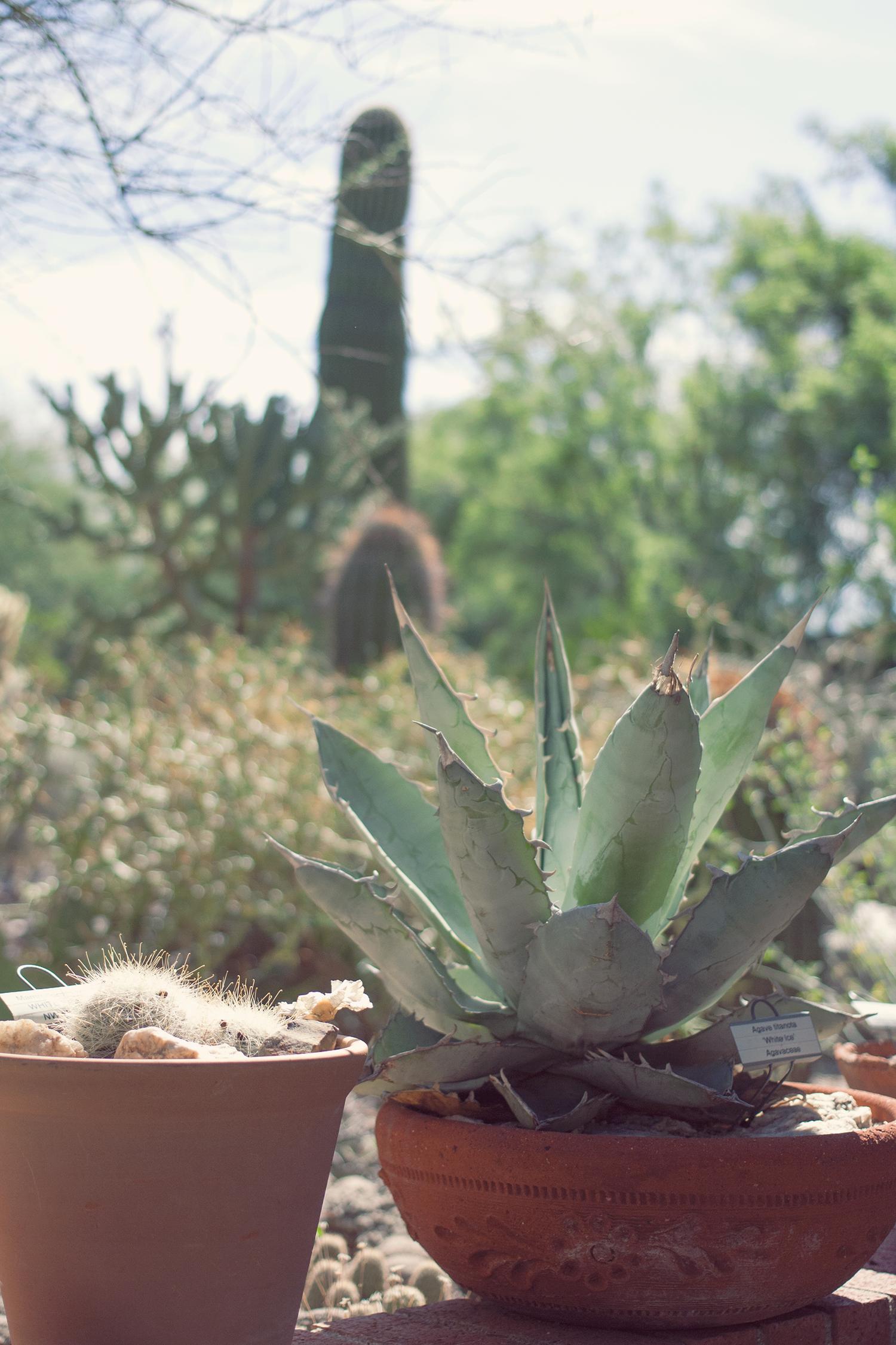 tucson-botanic-garden8.png