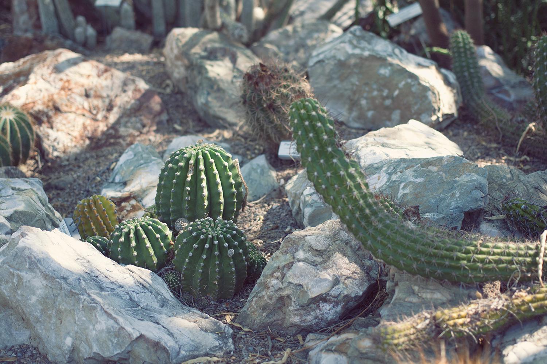 tucson-botanic-garden10.png