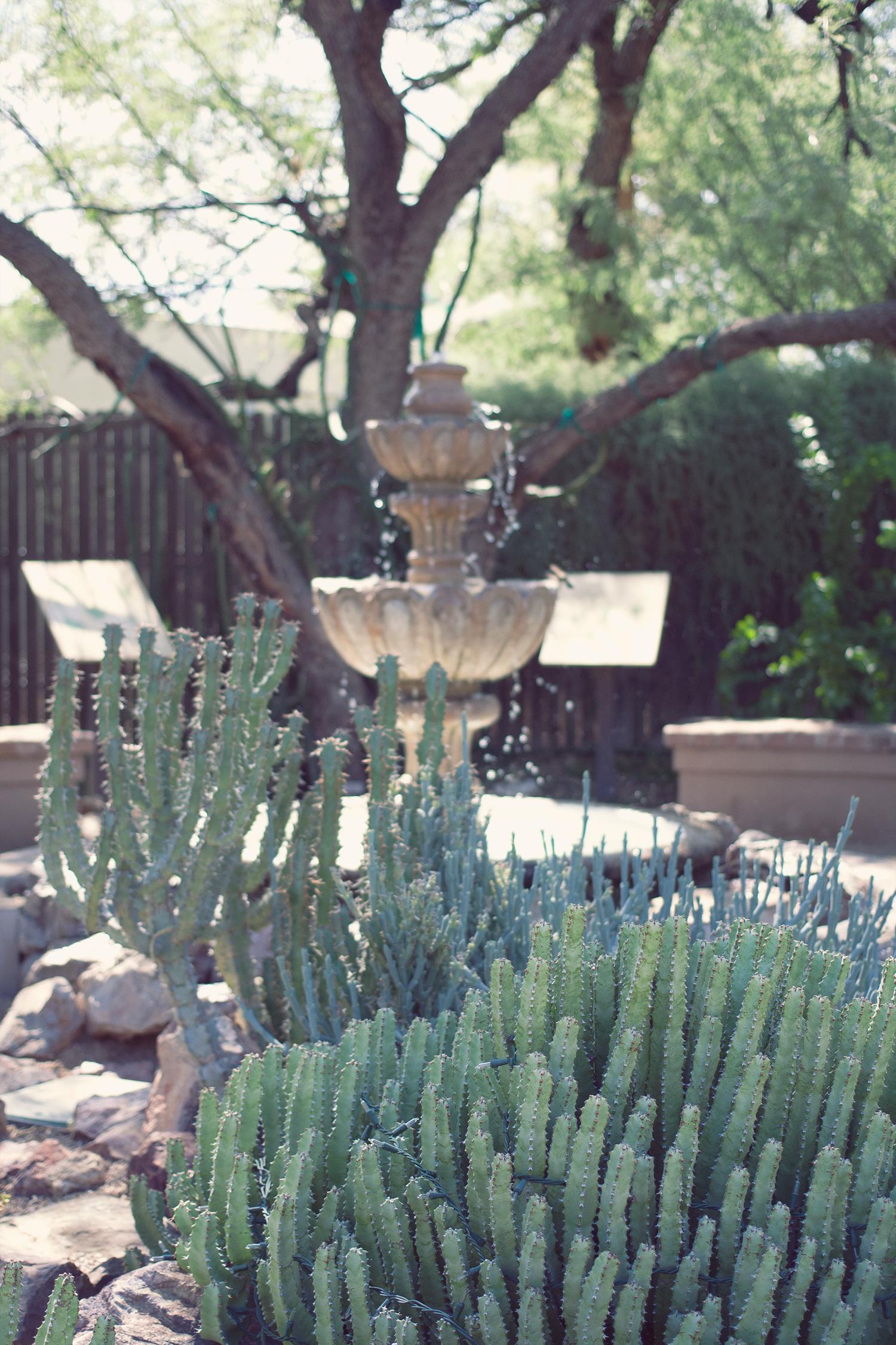 tucson-botanic-garden9.png