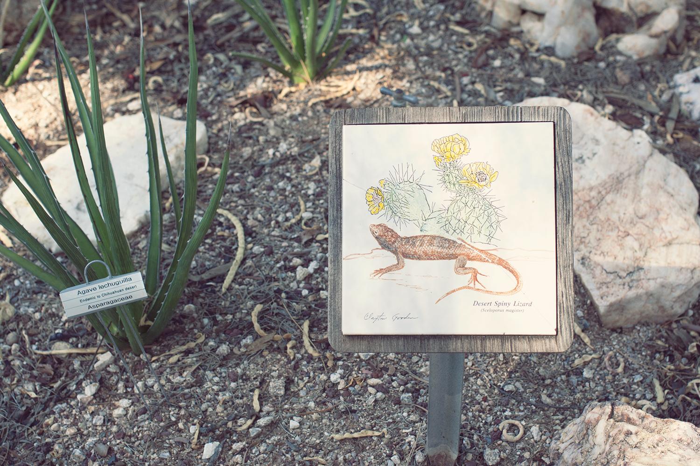 tucson-botanic-garden14.png