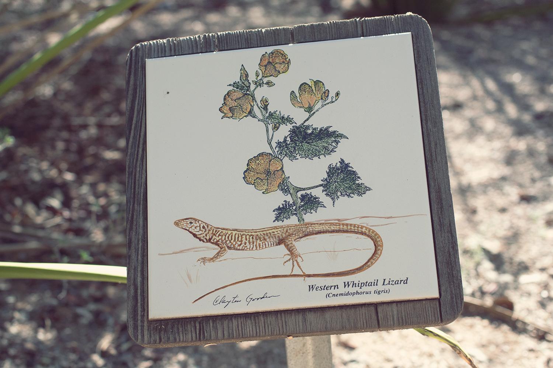 tucson-botanic-garden16.png