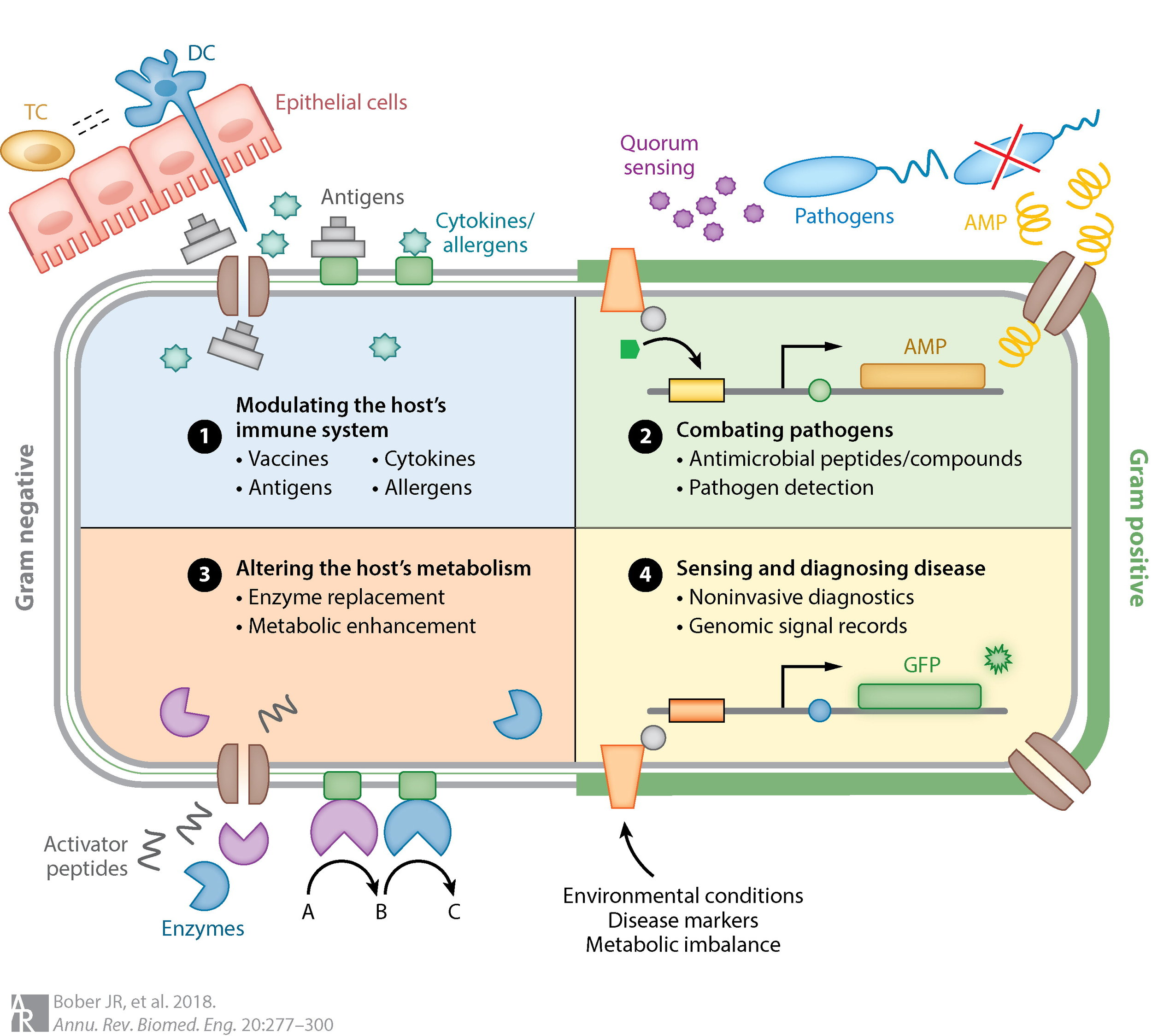 Opportunites to engineer host-associated microbiota. -