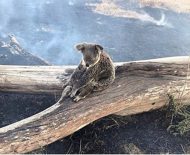 Our hearts are heavy this week for the lives impacted by the devastating fires across Queensland and Northern New South Wales. We thank the brave men and women for their efforts in battling this catastrophic event, we praise the enduring strength of all affected communities, and the organisations dedicated to saving the affected wildlife within. Stay safe everyone ❤️ Photo supplied by the Jimboomba Police