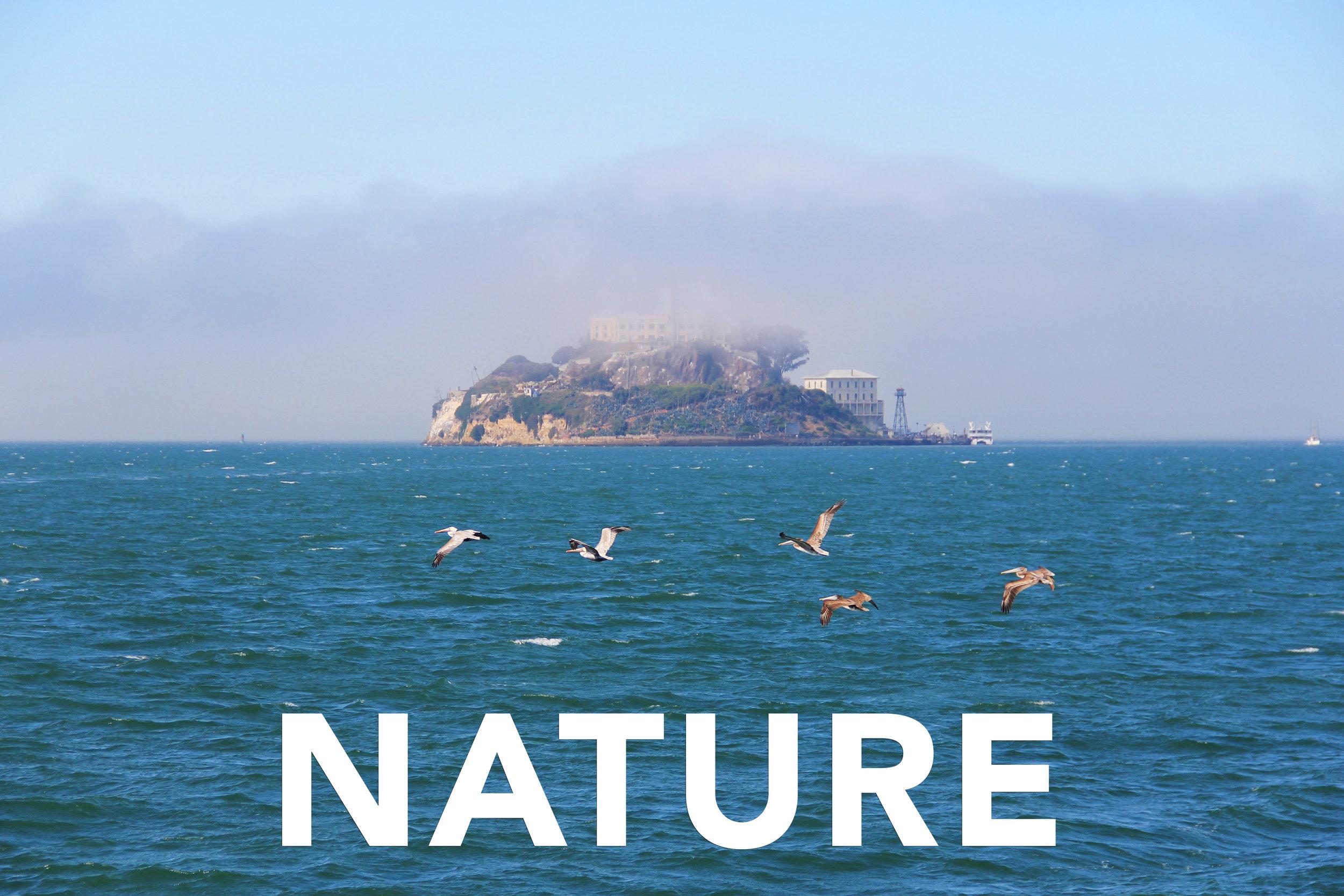 Nature Header.jpg