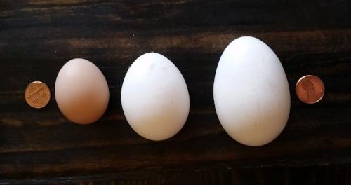 Egg comparison.jpg