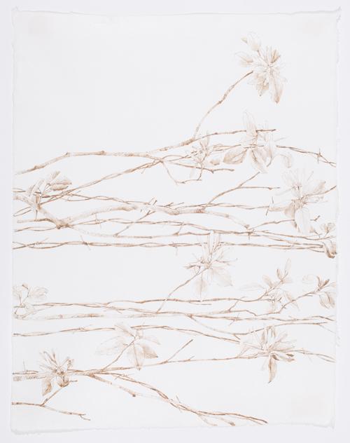 "Serviceberry Fence , walnut ink on Japanese paper, 21.5 x 17"""